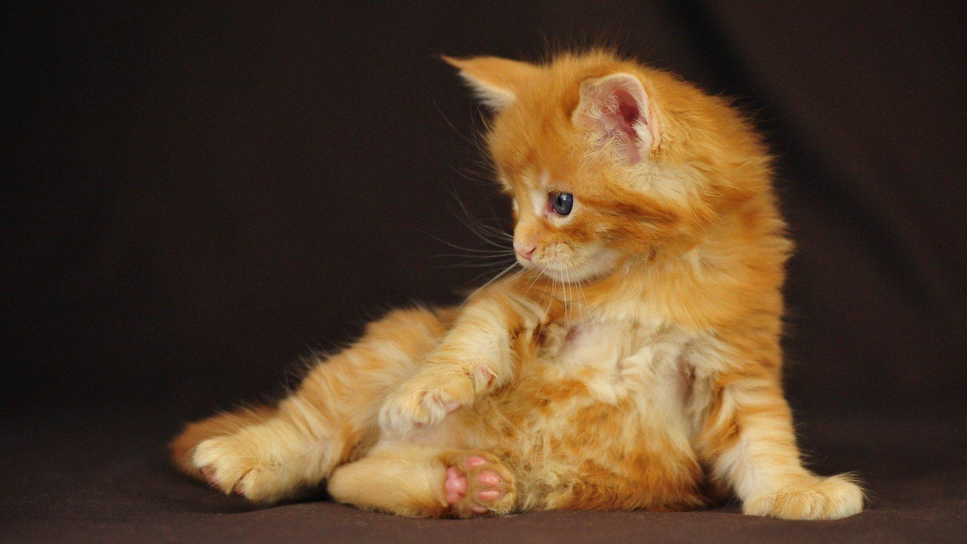 цельного бока картинки рыжего котенка конечно, перезимовывают