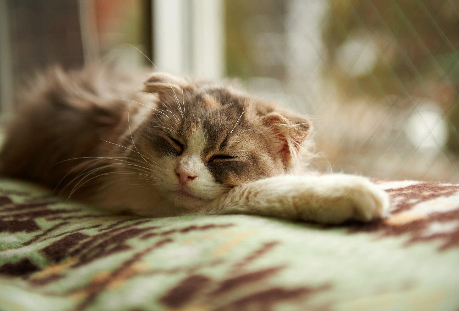Картинки прикол, спокойной ночи картинки животные прикольные