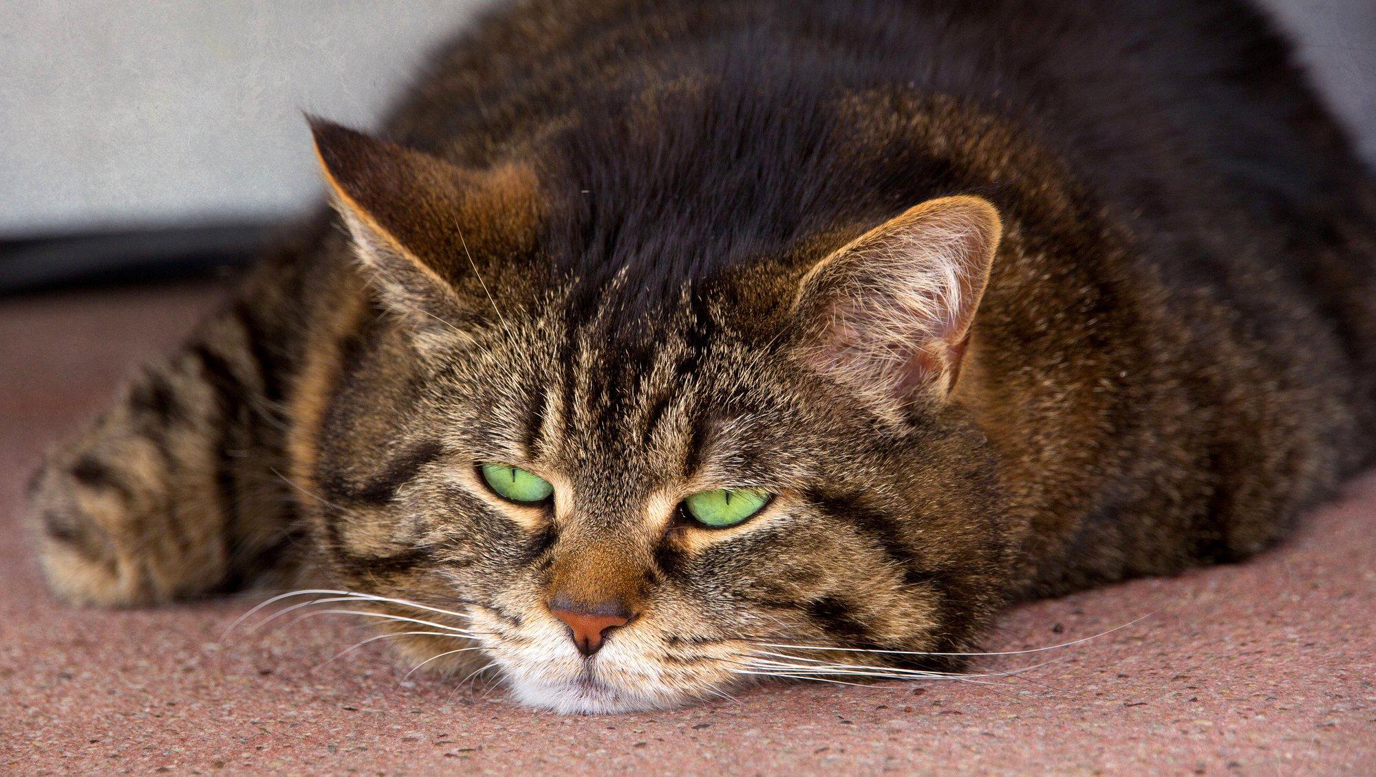 если кот полосатый открытка адирондак дерева