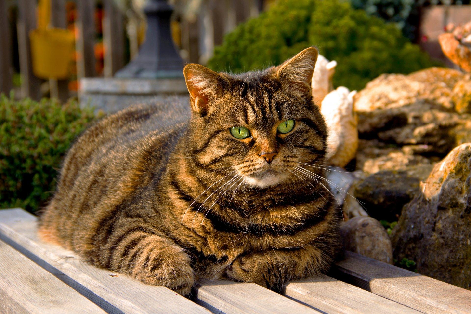 Большие красивые картинки кошек