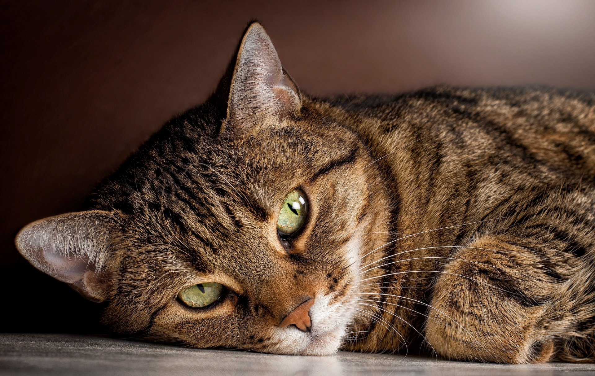 вариант качественные фото кошек заготавливают период