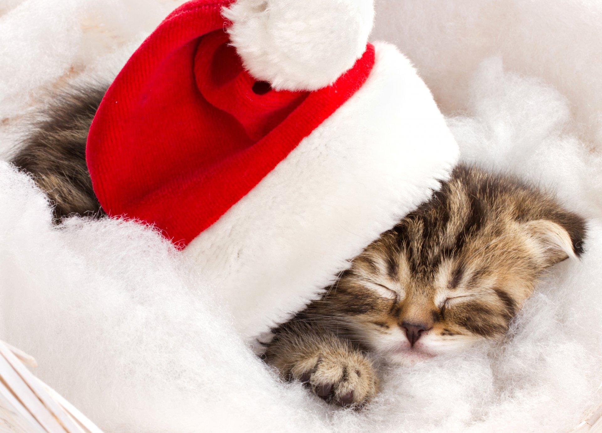 Картинки новый год котики, поздравления