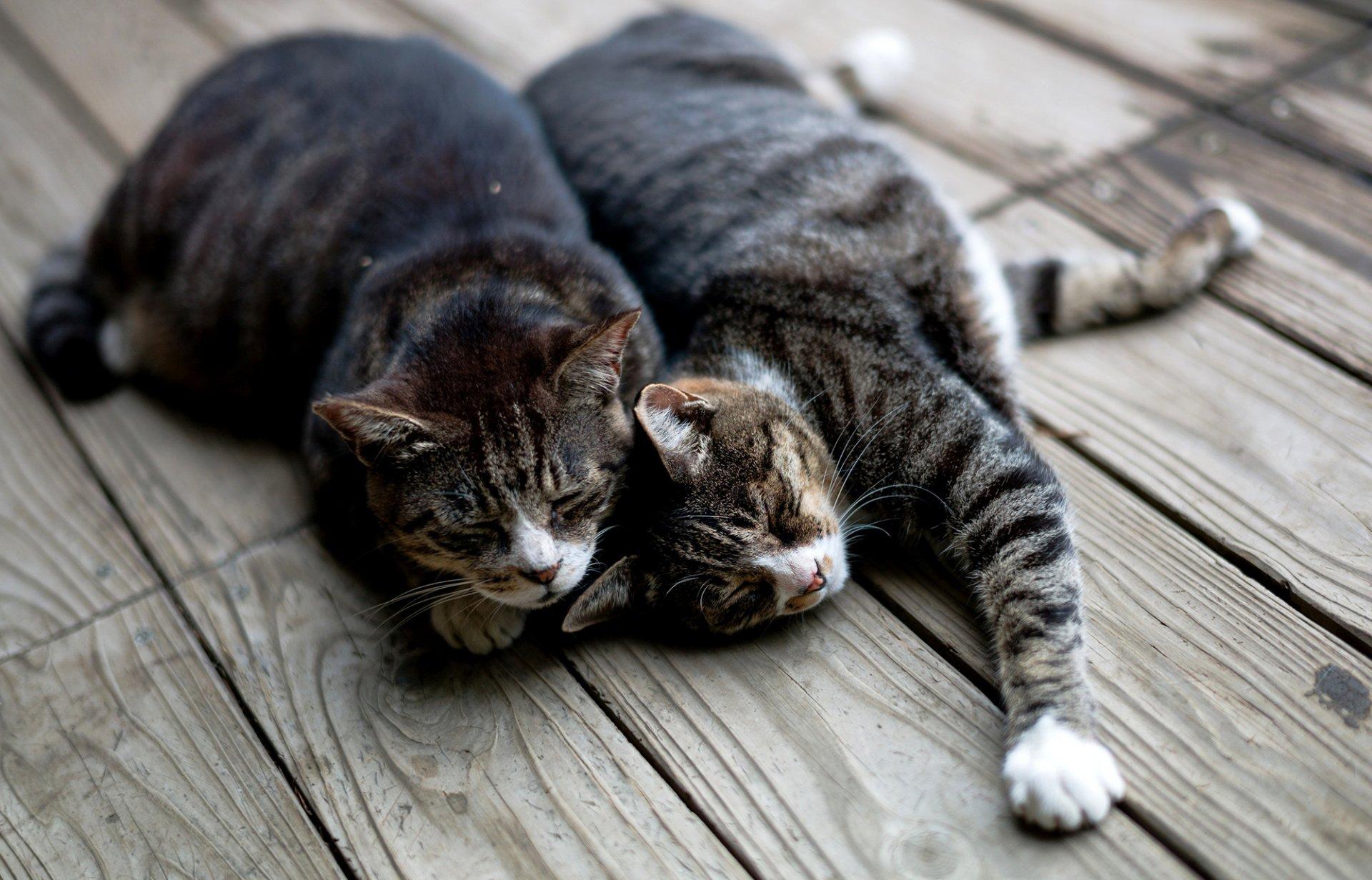 наплыв обои на рабочий стол два котенка мастера