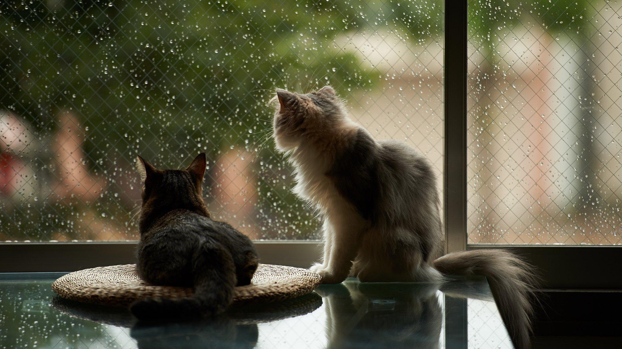 грустный кот дождь анимация скачать