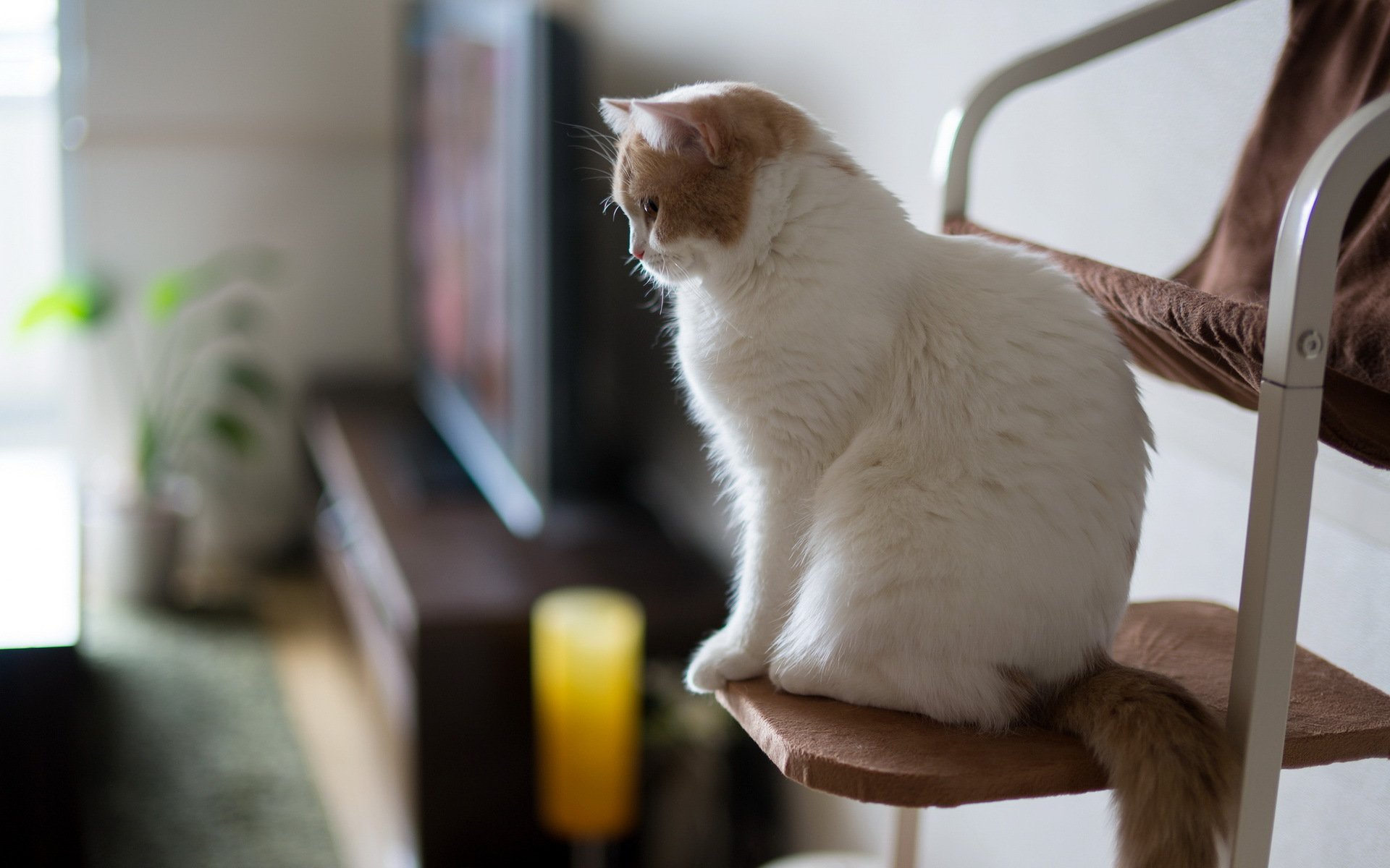 Картинки кошек я домашних