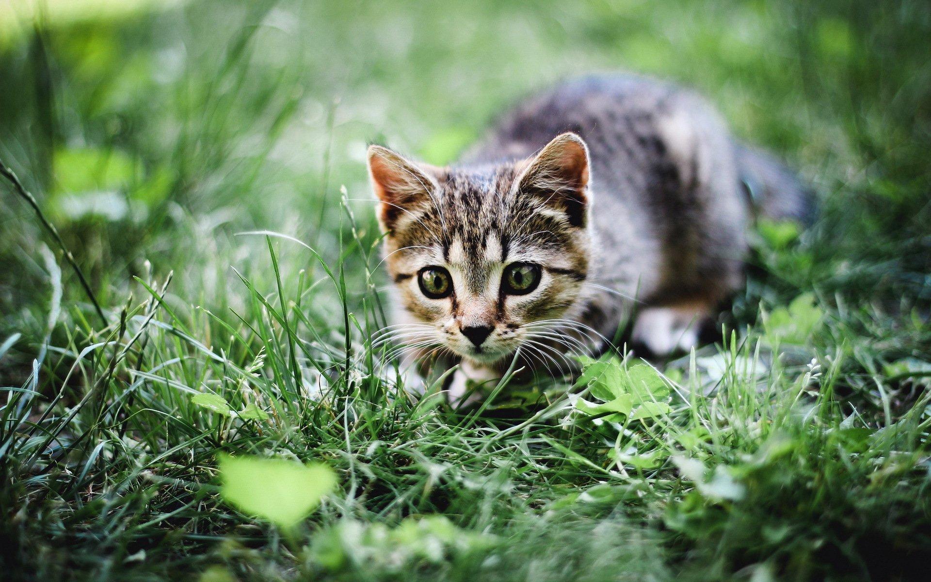 котенок прыжок трава цветы загрузить