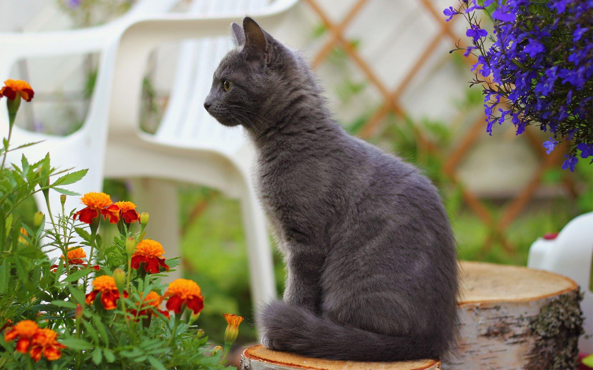обои на рабочий стол котенок в цветах тут подумала