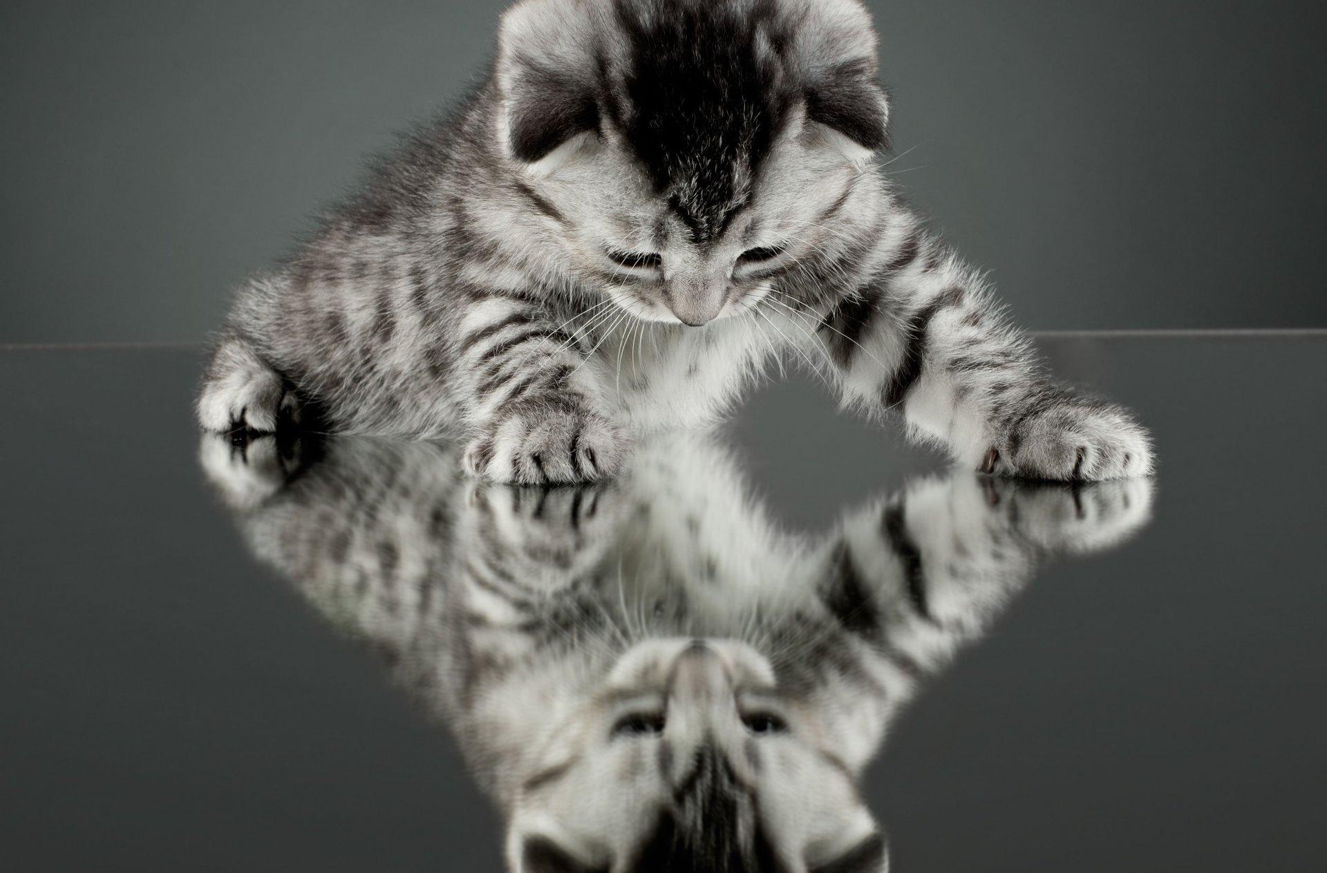 нужно сильно картинки на телефон движущиеся животные кошки твой славный день