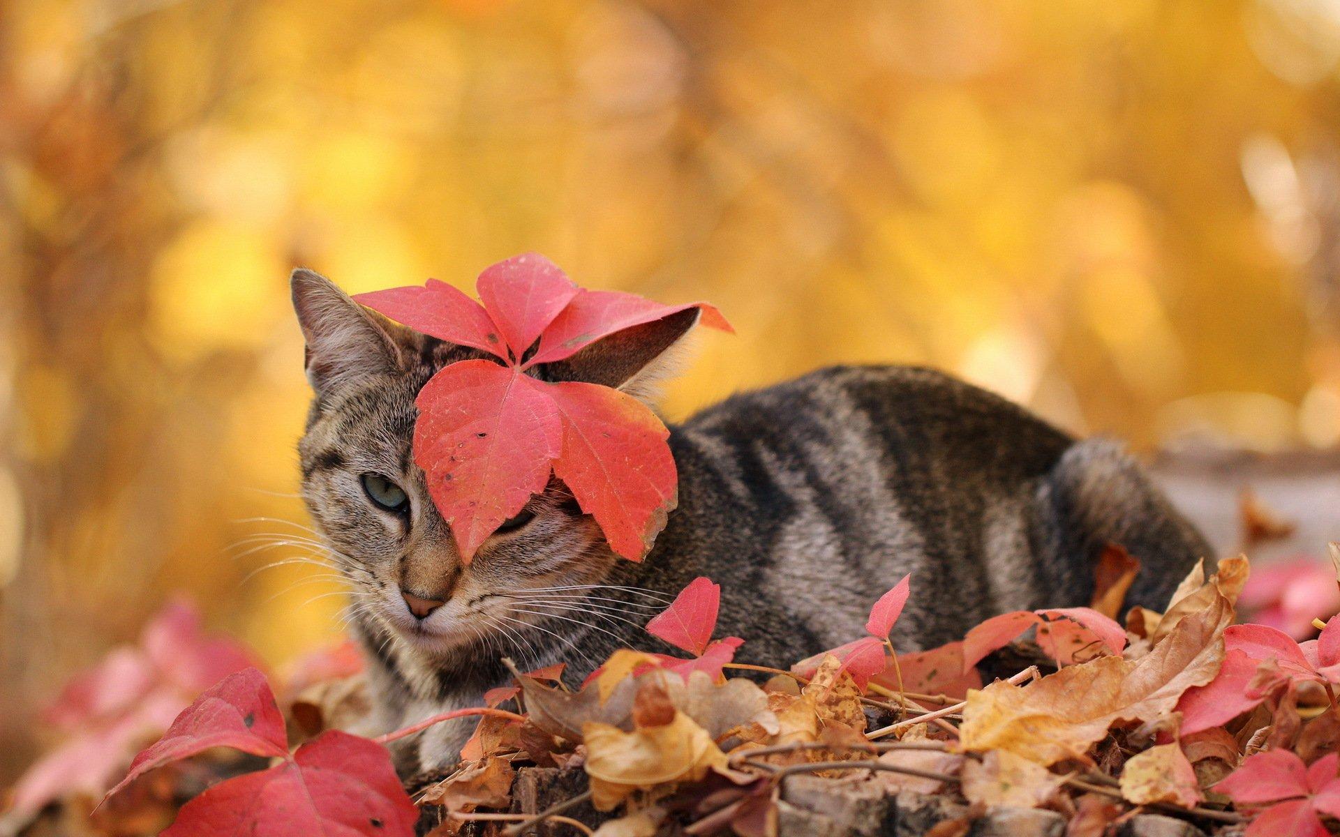 Кошки в осенних листьях картинки