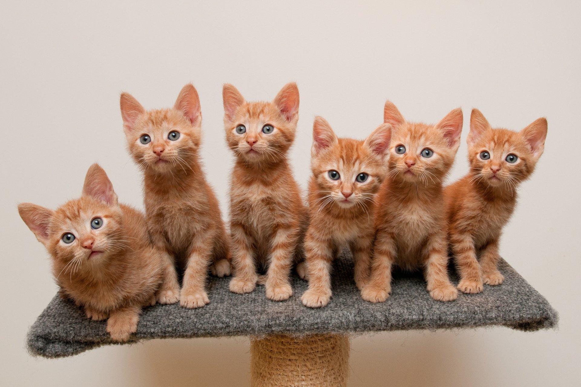 Много картинок в одной картинке с котятами