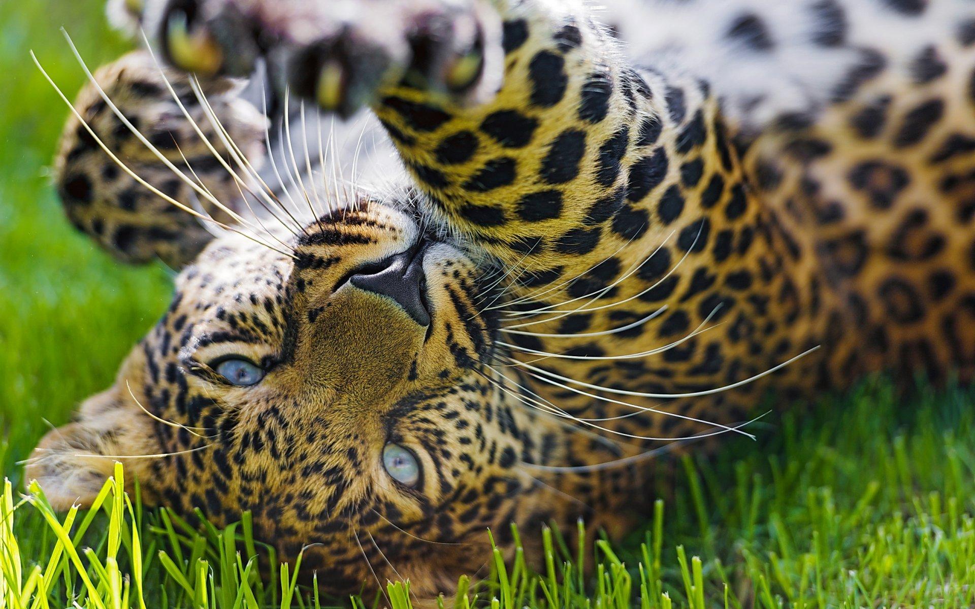 гостинку картинки на рабочий на телефон леопард врач акушер-гинеколог