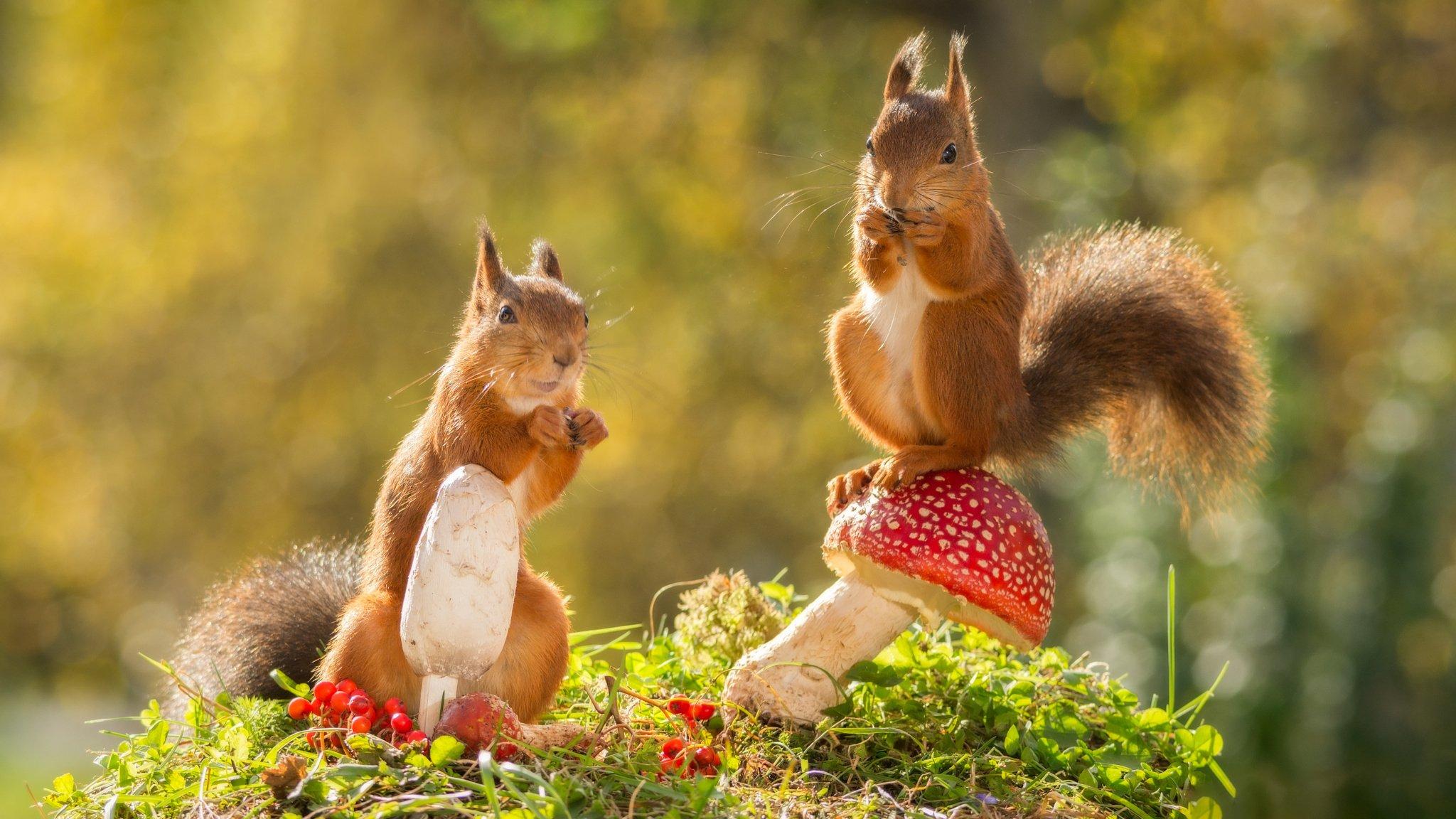 природа животные кролик листья осень деревья  № 2035276 бесплатно