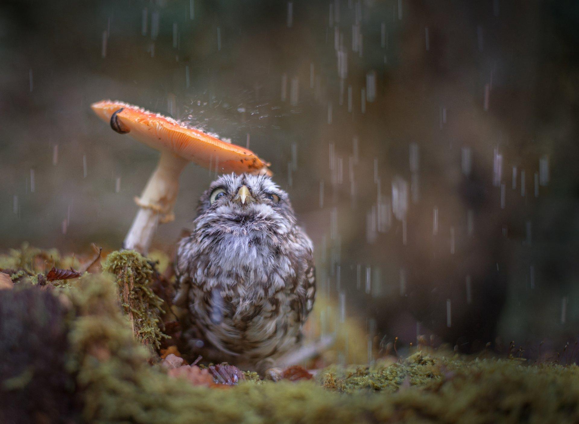 Карандашом для, дождь смешные картинки
