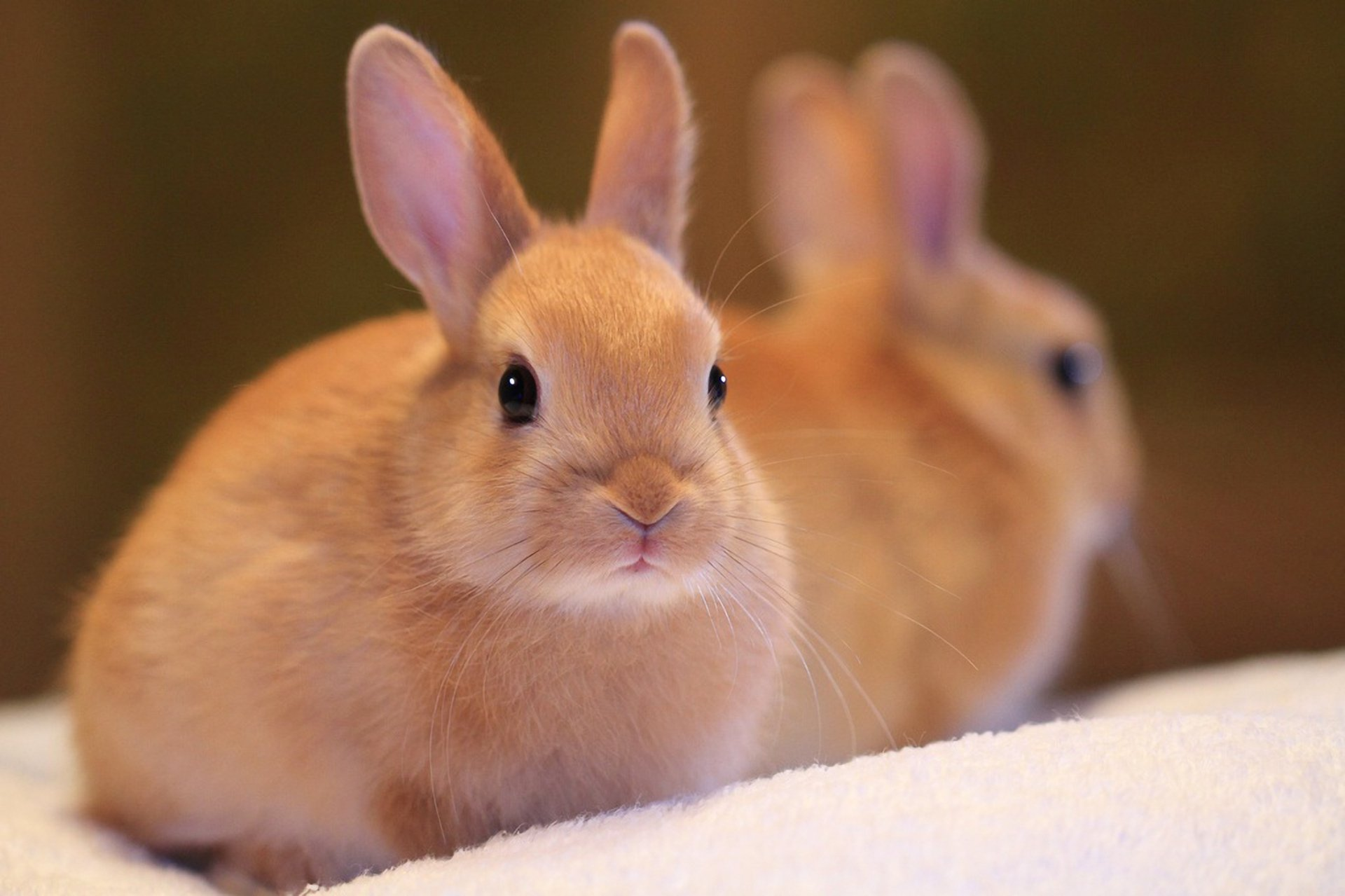 кролик девушка природа животное скачать