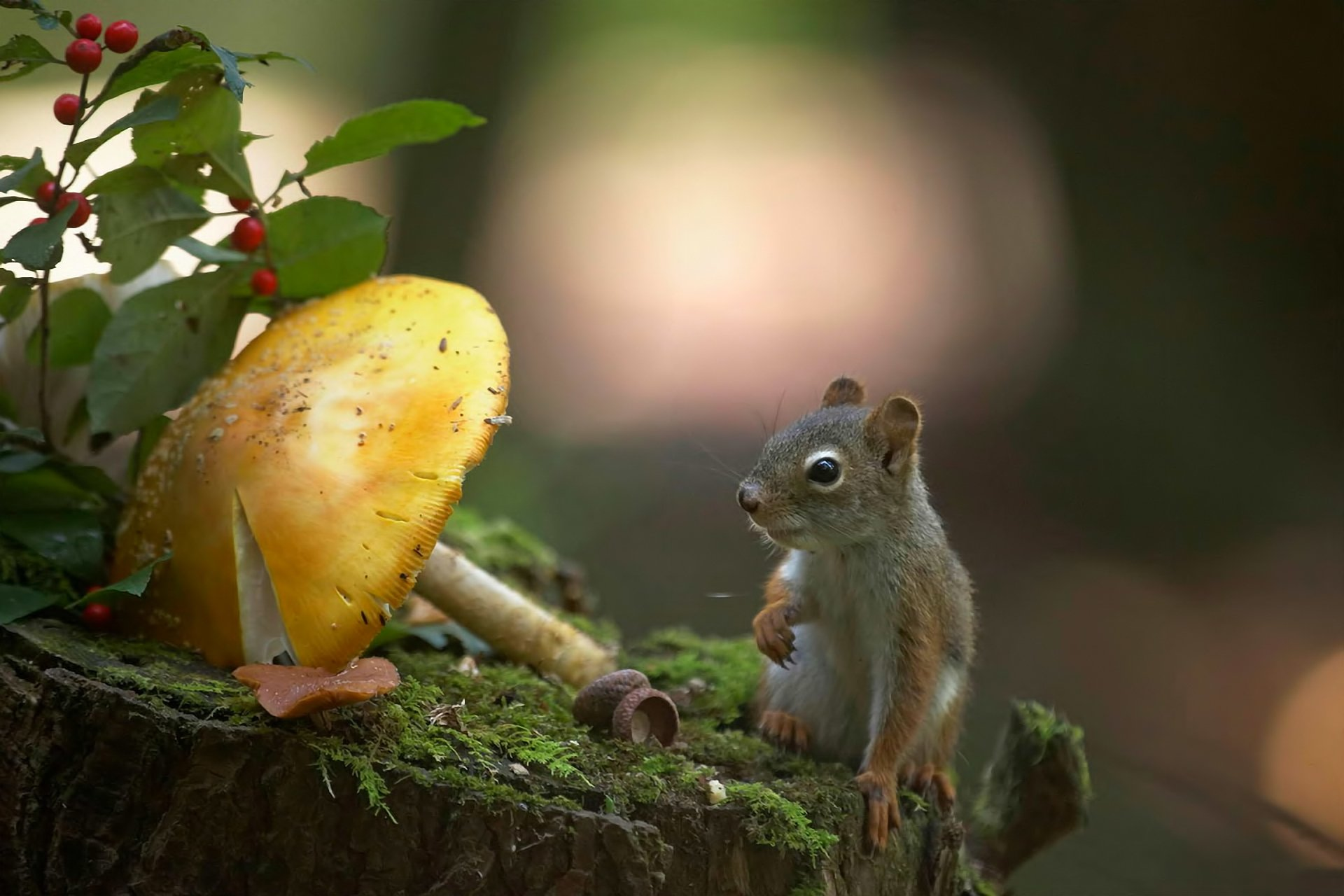 Открытки животные на природе