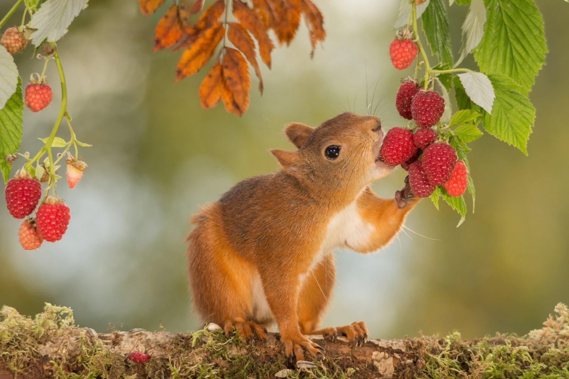 Надписями листках, красивые картинки с природой и животными