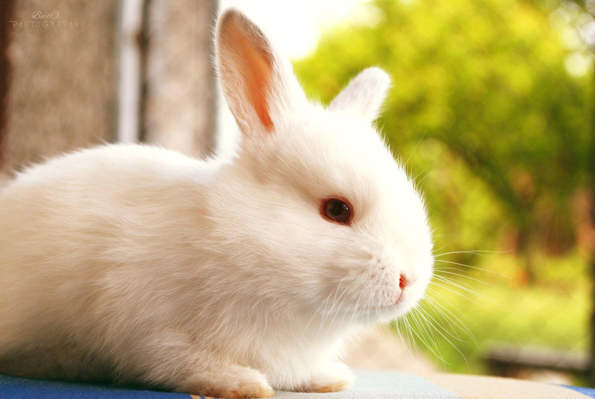 Детьми винтажные, картинки с кроликами фото