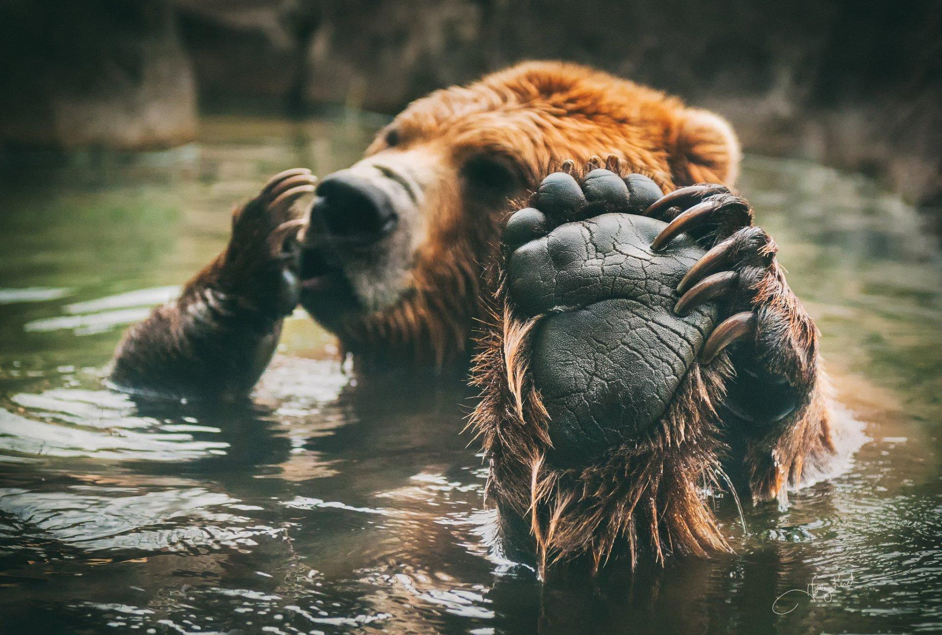 Медведь картинки на телефон прикольные