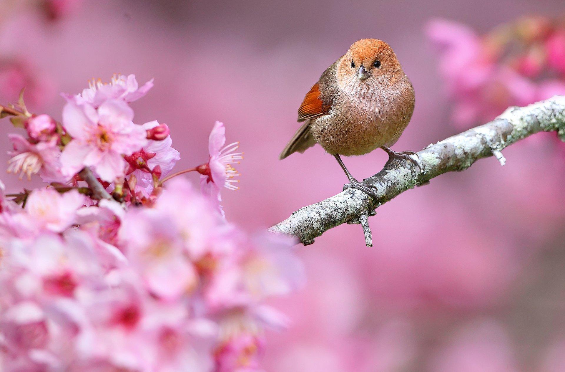 Картинки, картинки на телефон прикольные красивые для весны