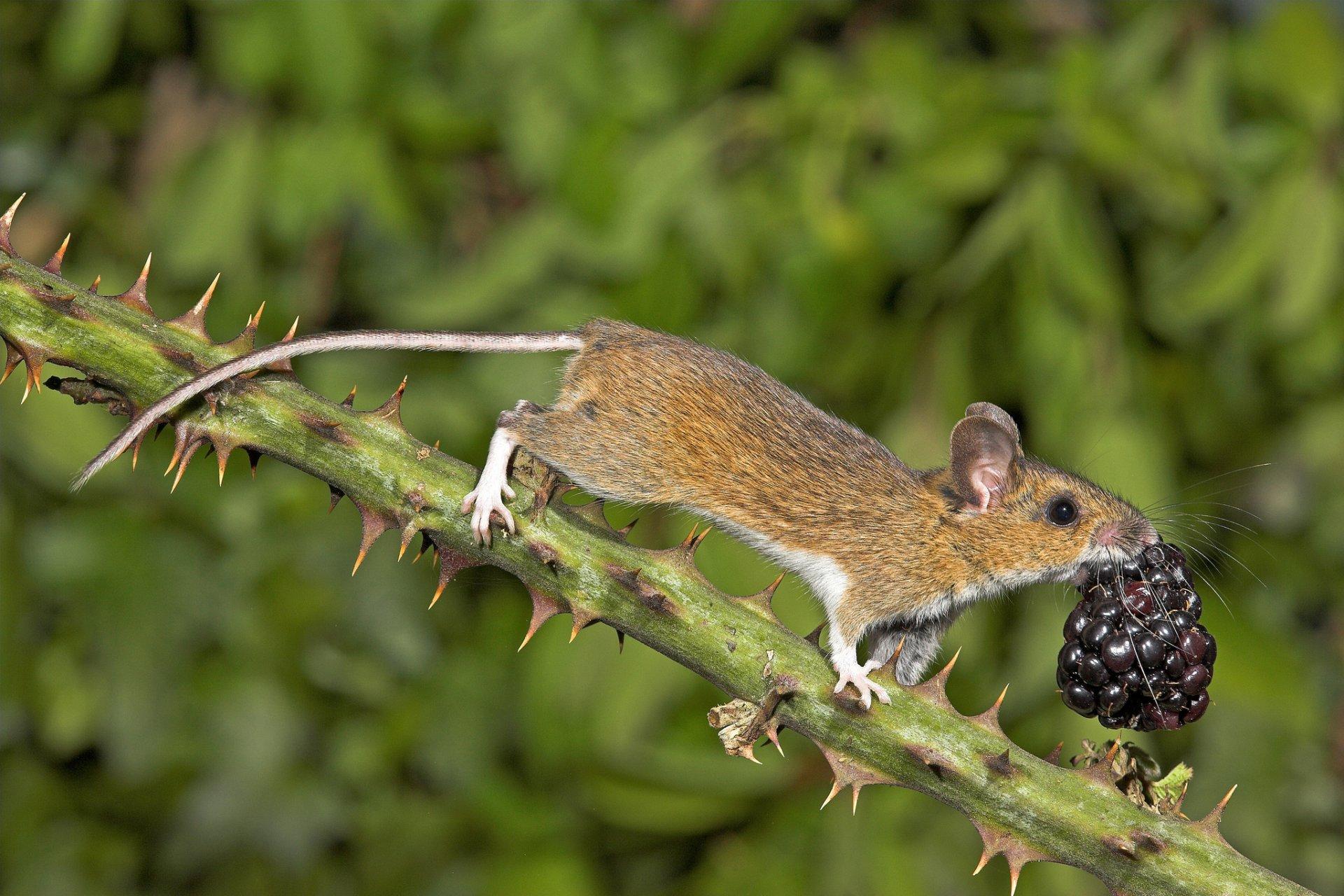 дикие животные поедающие плоды фото колонку