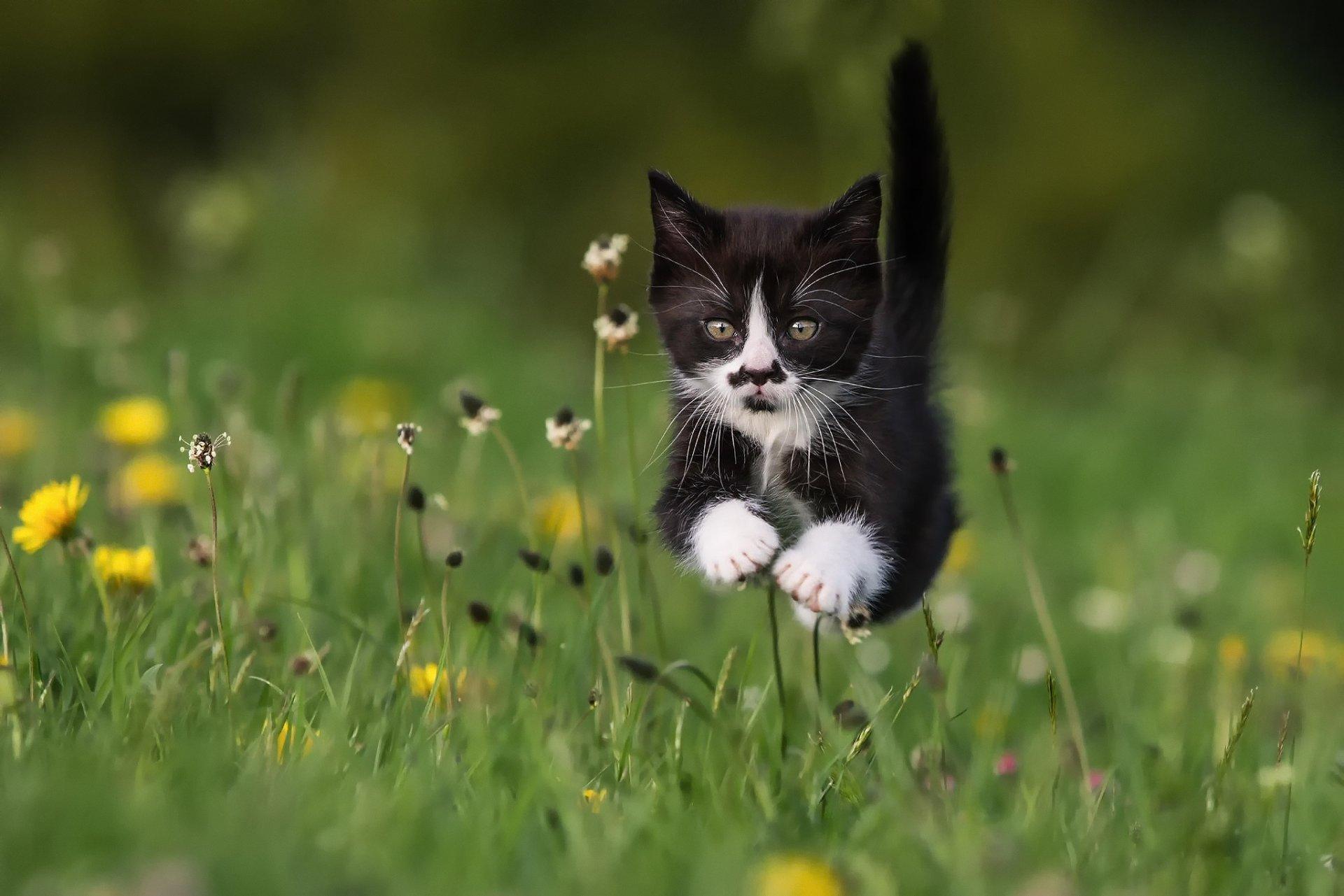 Котенок летом картинки