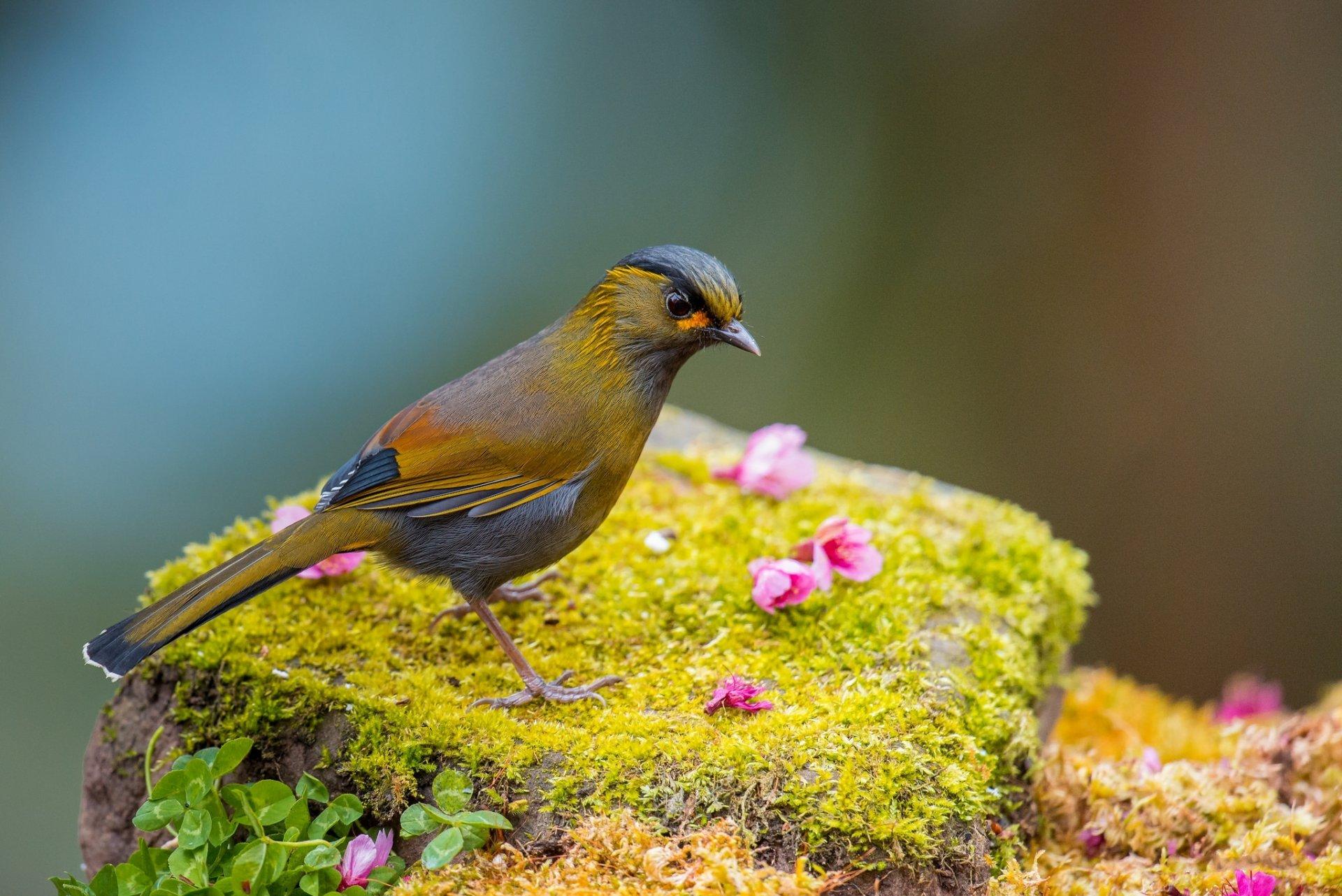 Картинки природы животных и птиц