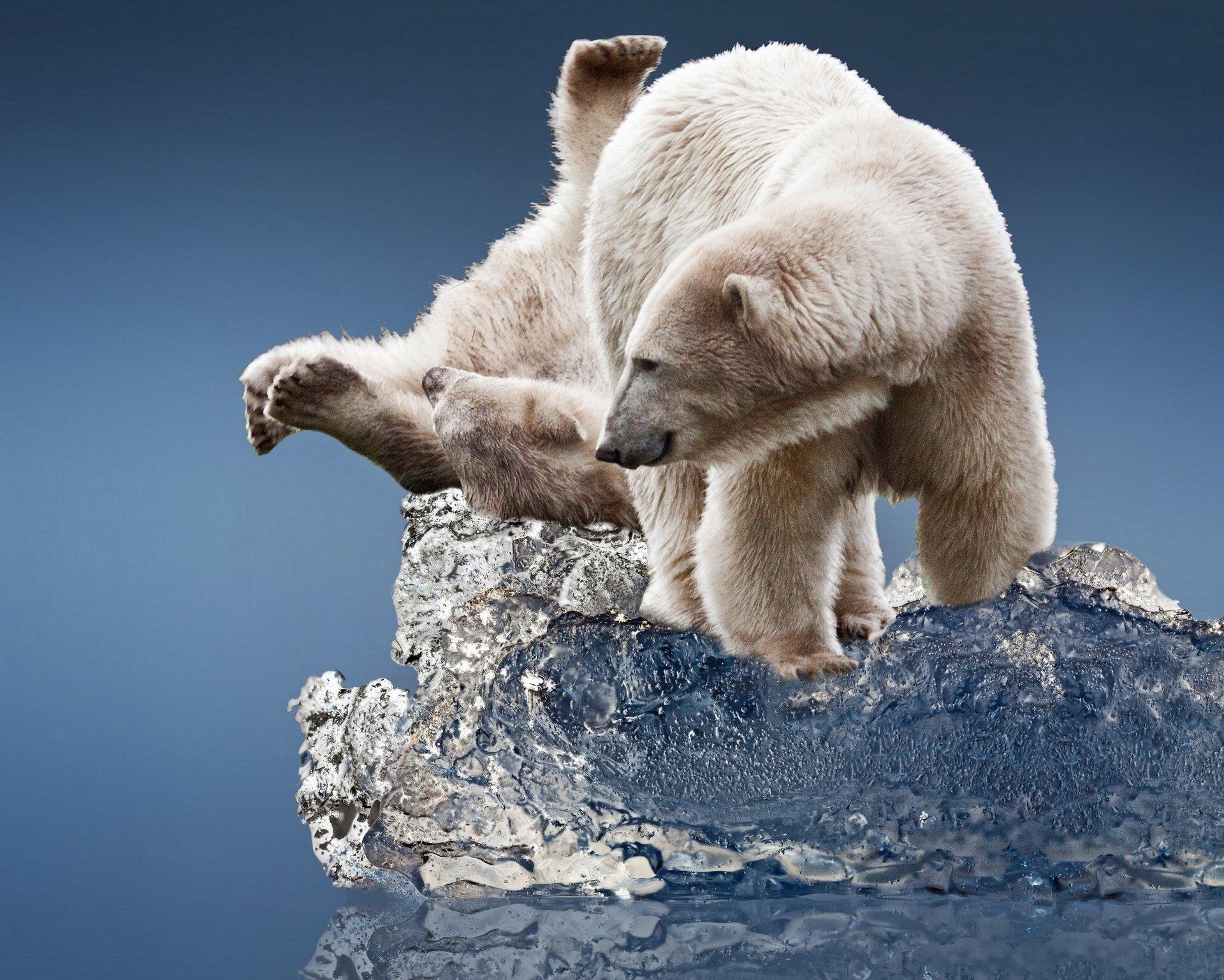 таком положении белый медведь лучшие фото колесом или