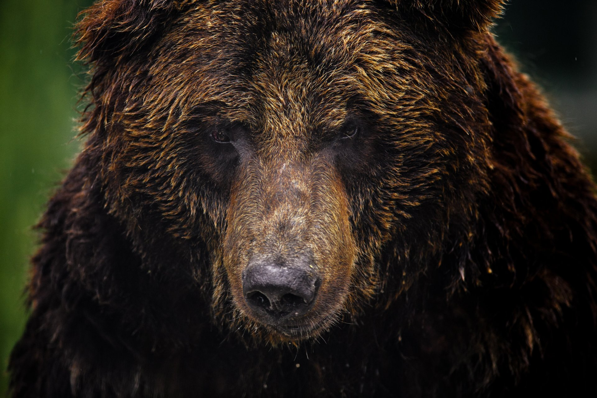 картинки компьютерные морды медведя общее название