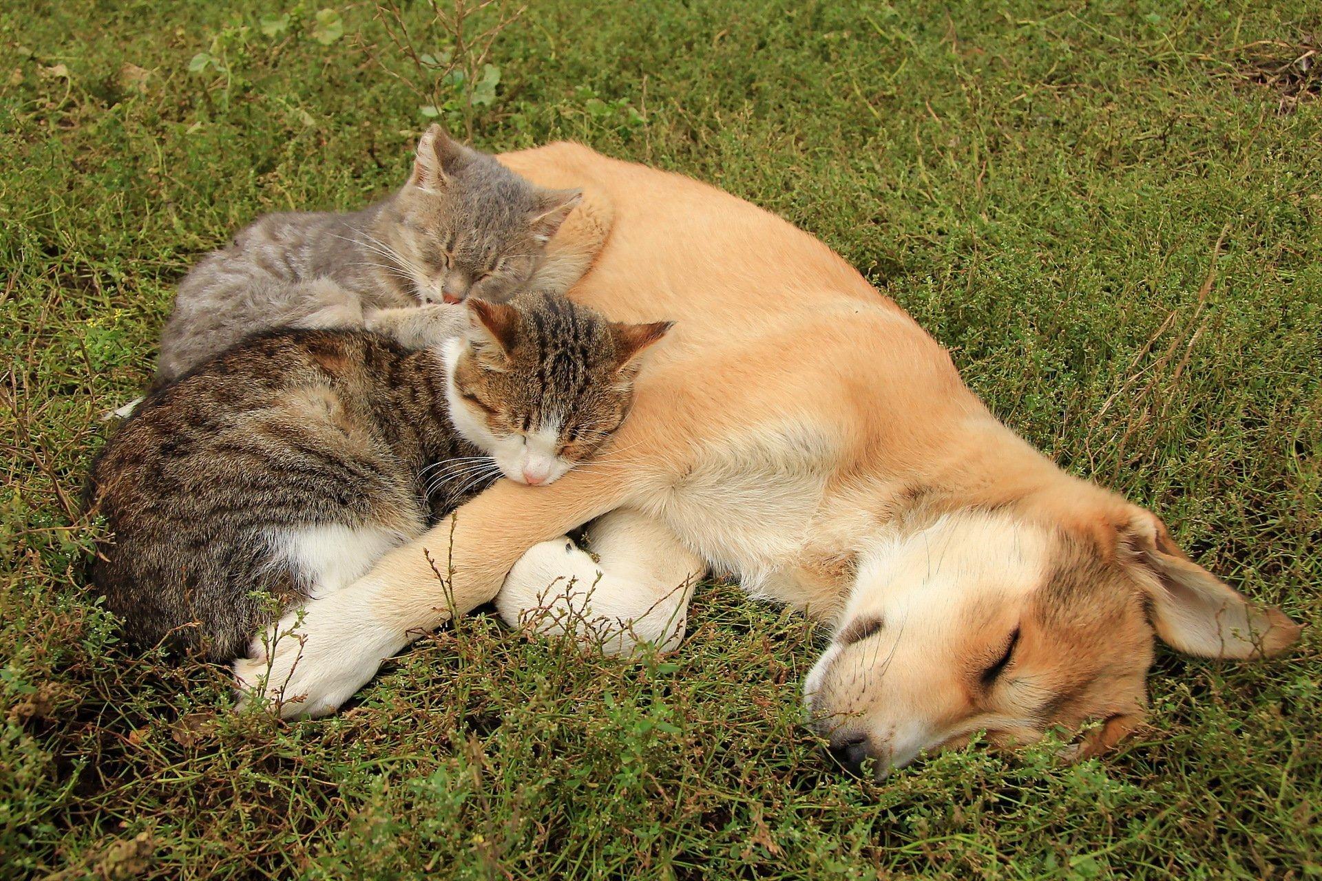 коты и собаки вместе фото одевается