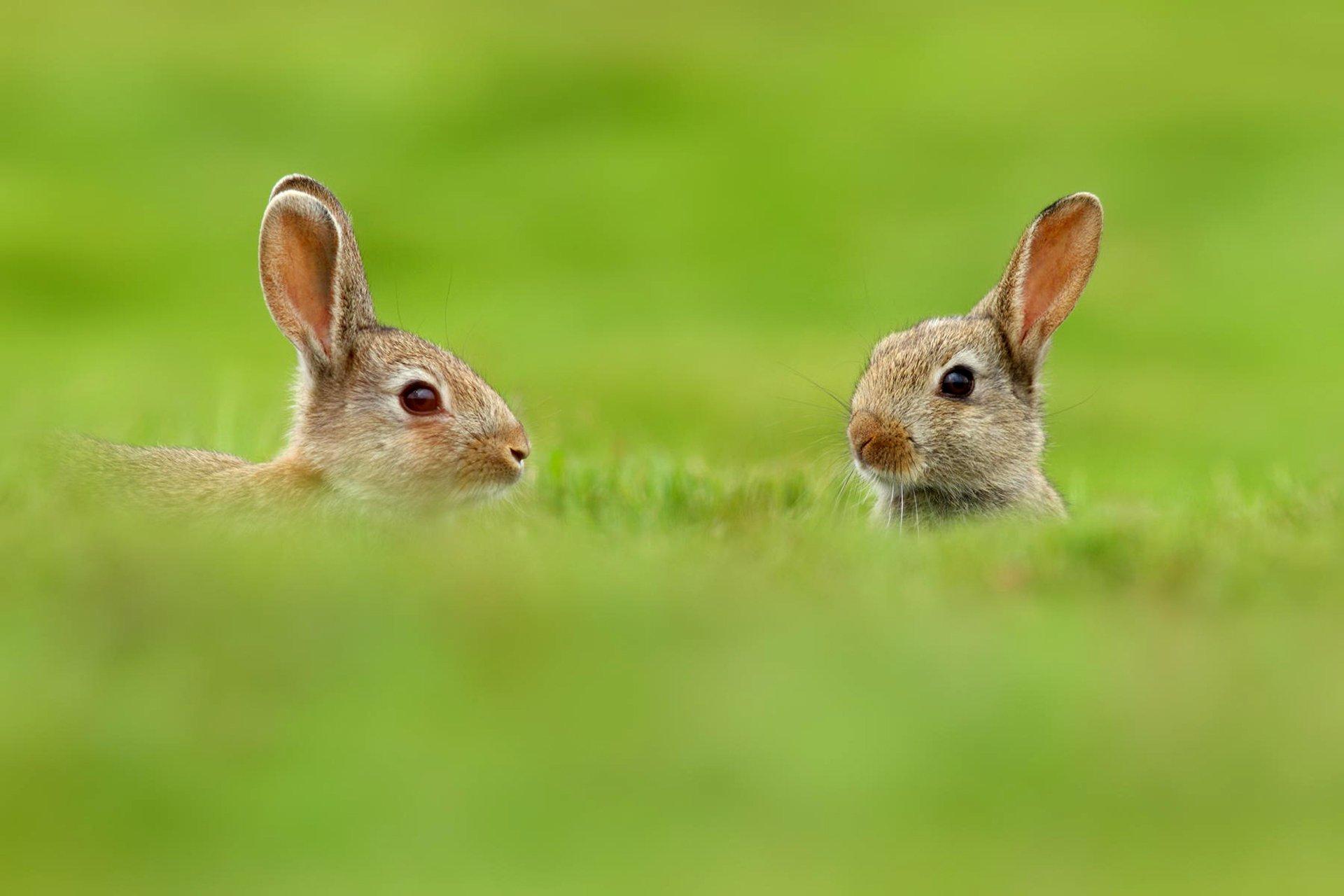 кролик трава  № 1964069 без смс