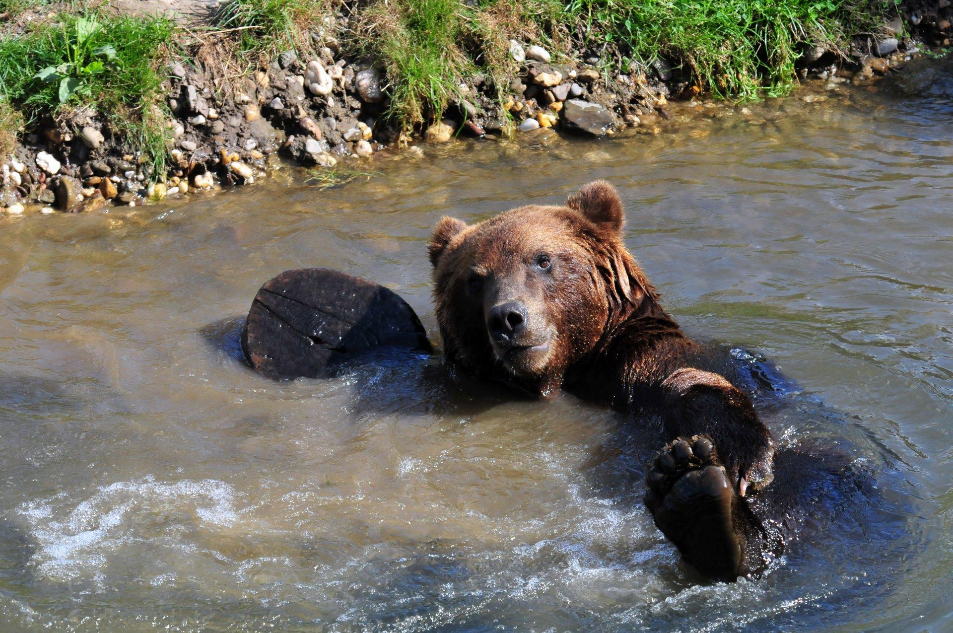 дом картинки мокрый медведь зелень