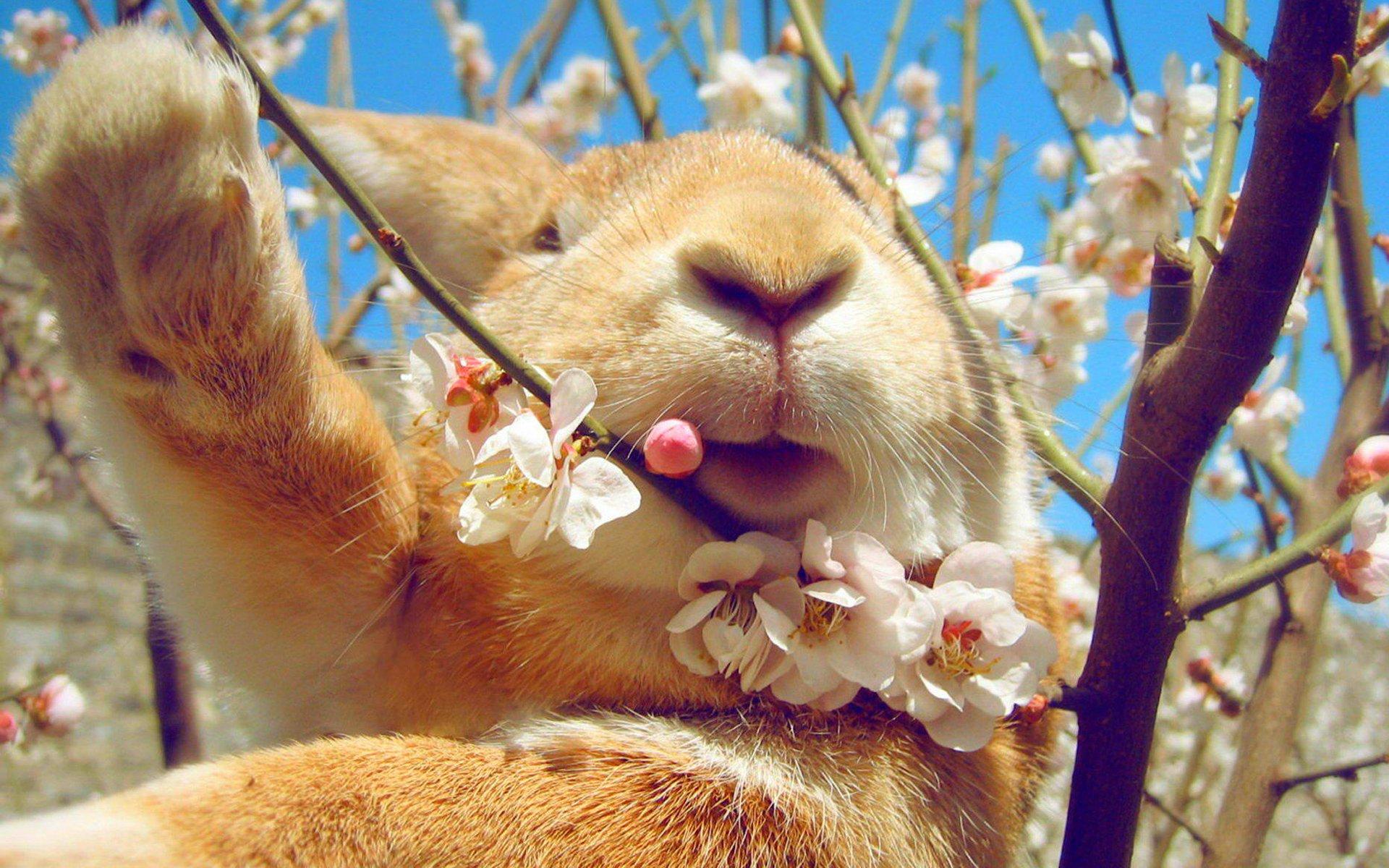 Весна. смешные картинки, картинки люблю тебя