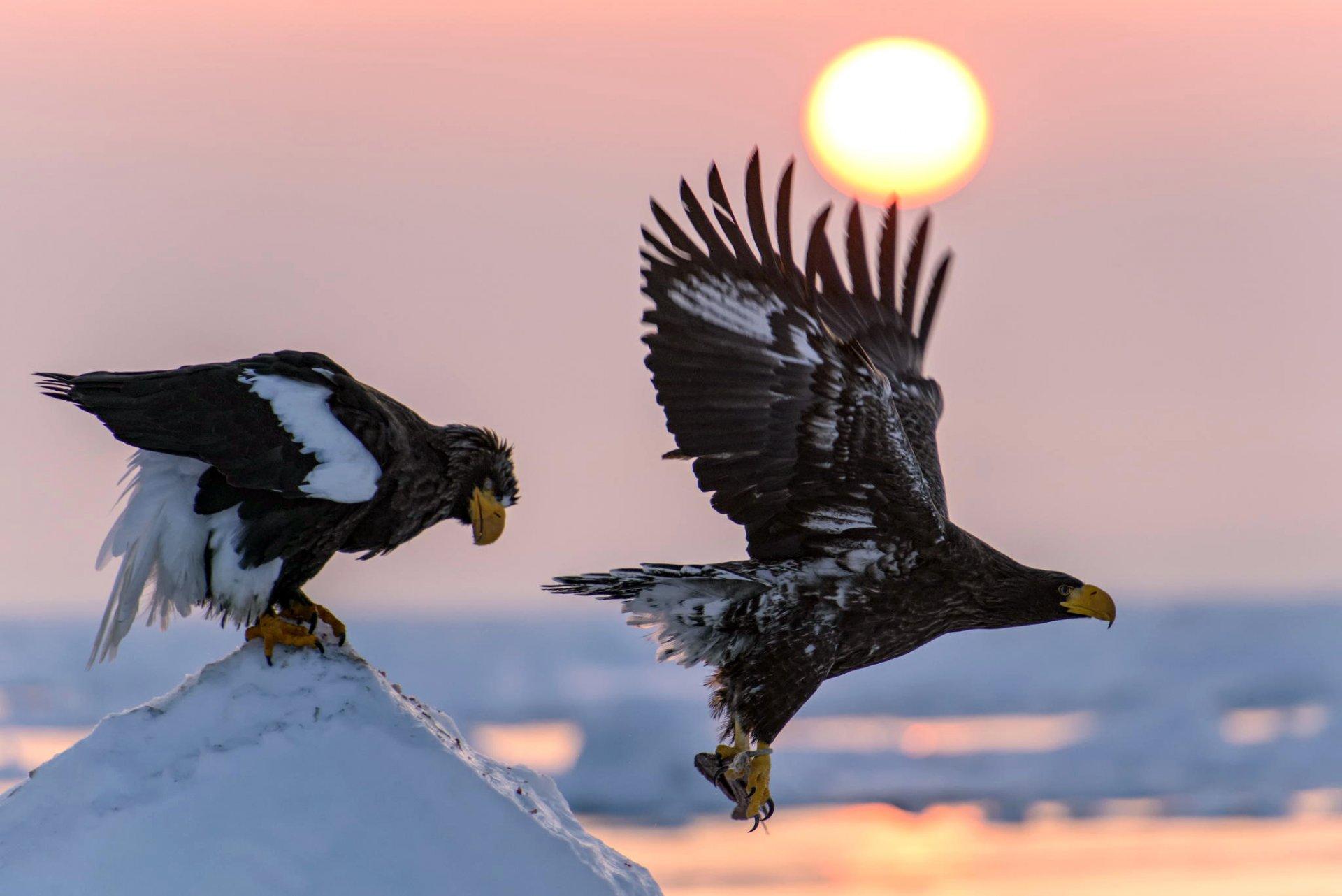 словом, картинка два орла в небе пошаговый рецепт приготовления