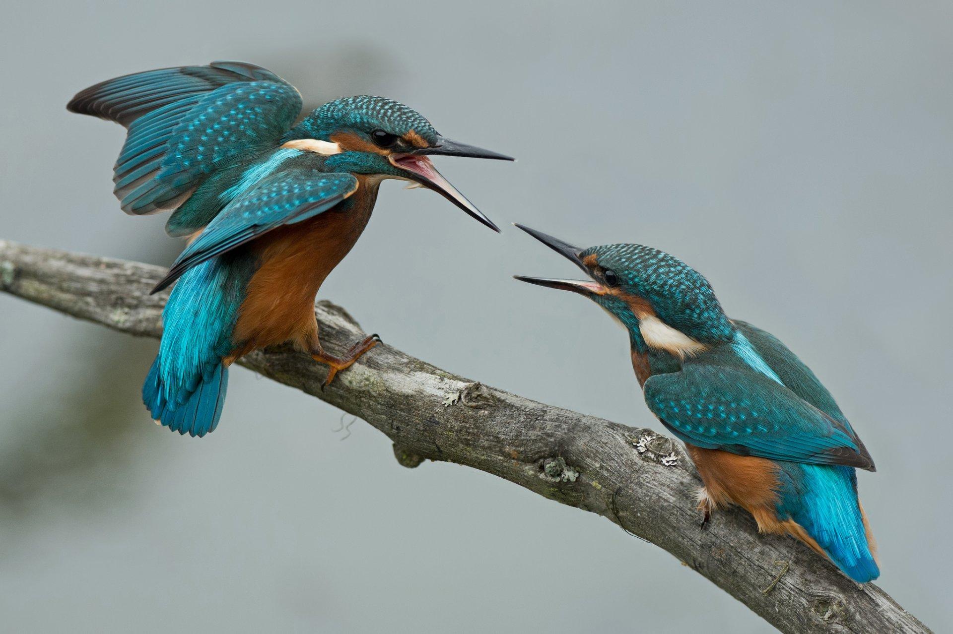 картинка с двумя птицами