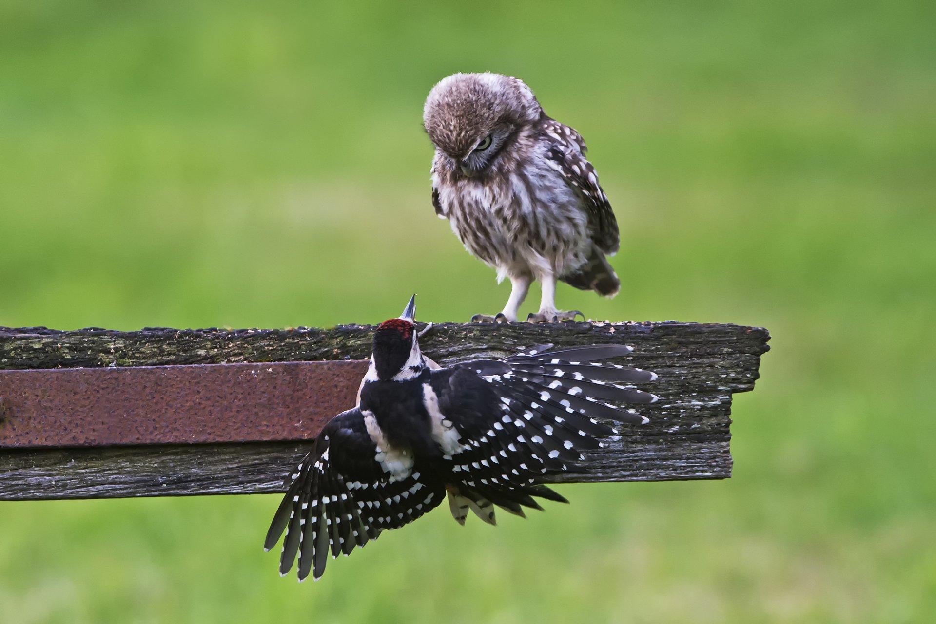 Отправлять открытки, прикольная картинка птица