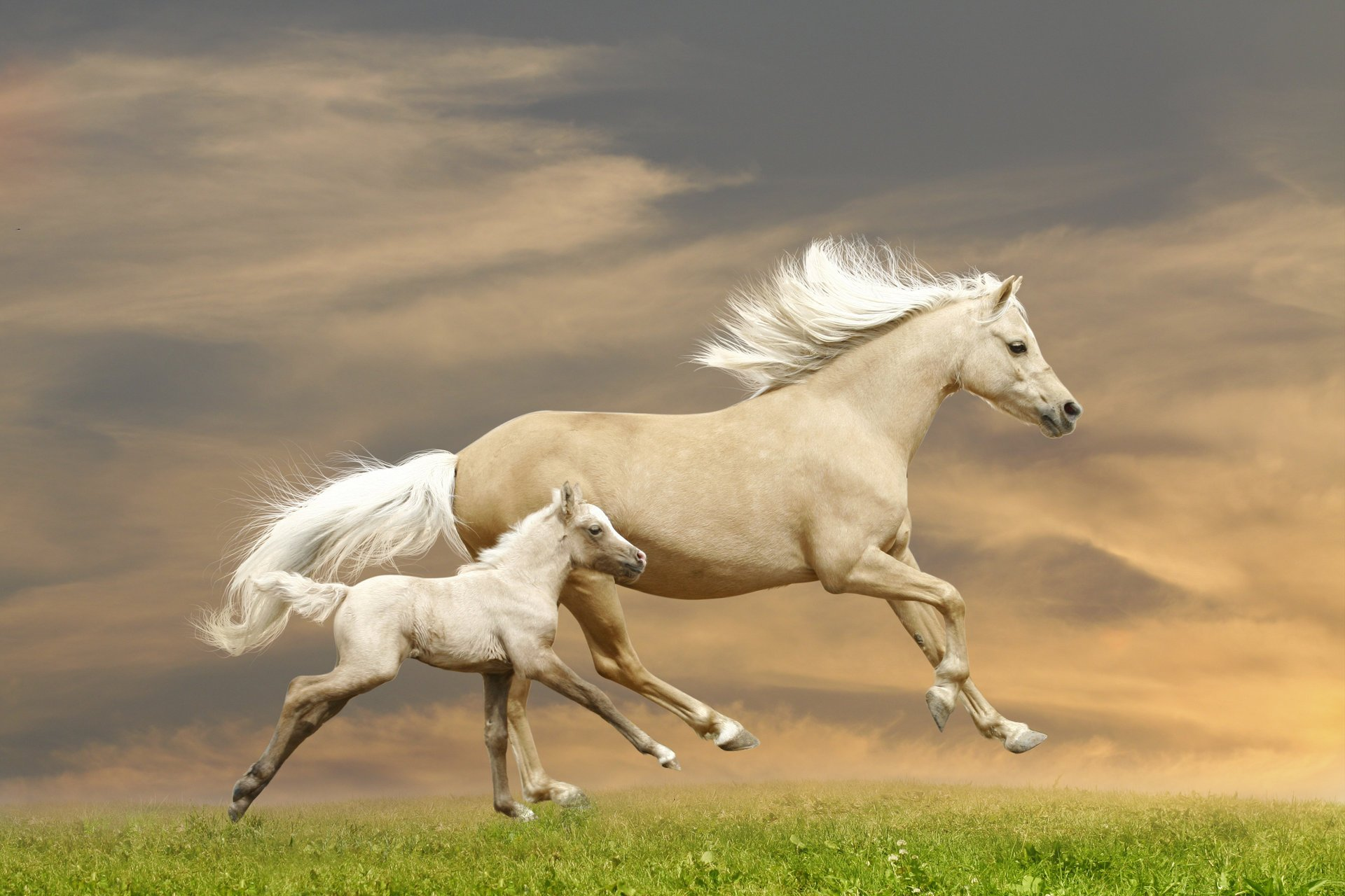 Днем, красивые картинки кони лошади