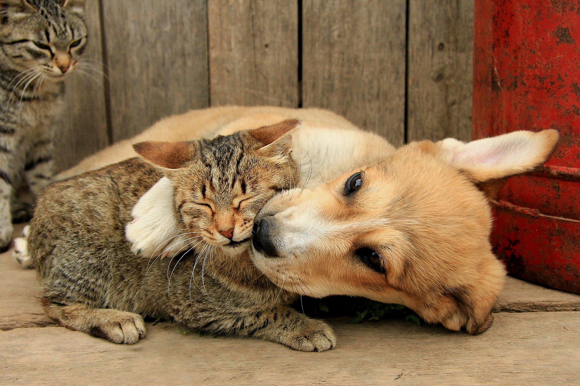 Александру, прикольные картинки про животных и любовь
