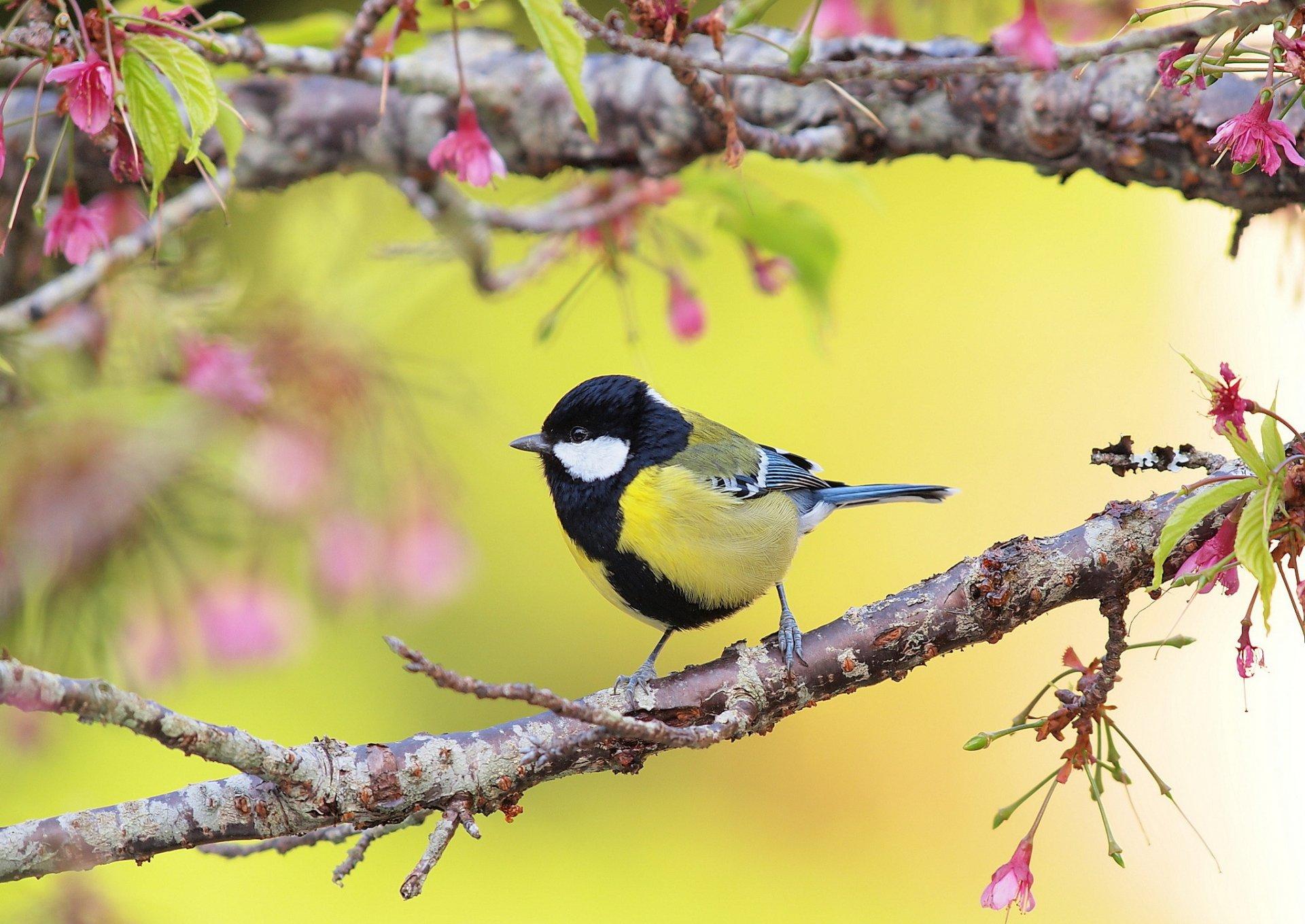 Сладких, птички на картинках