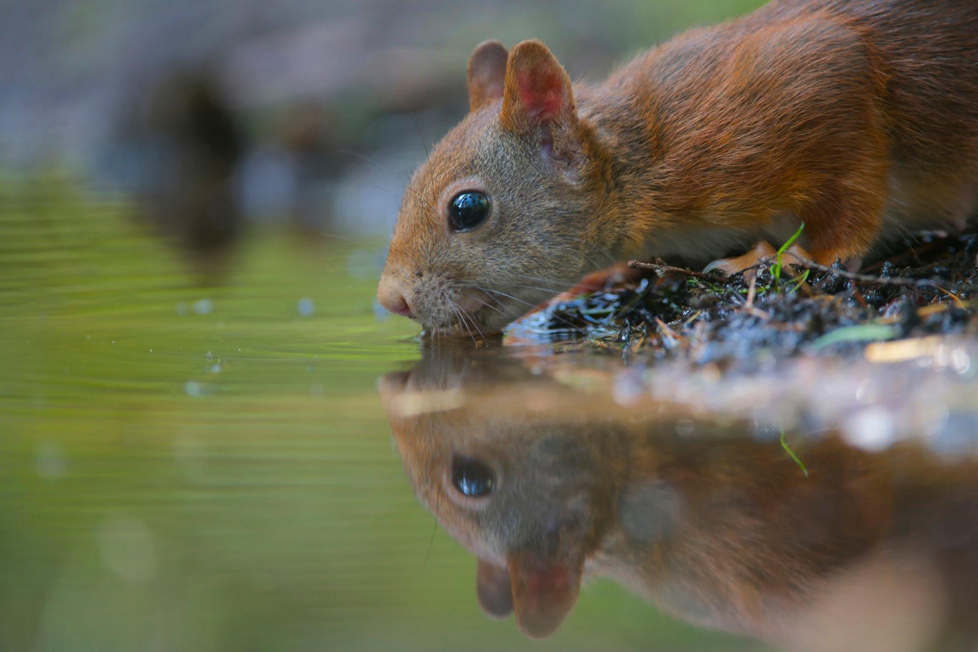 вооружения, картинки вода для животных показывали
