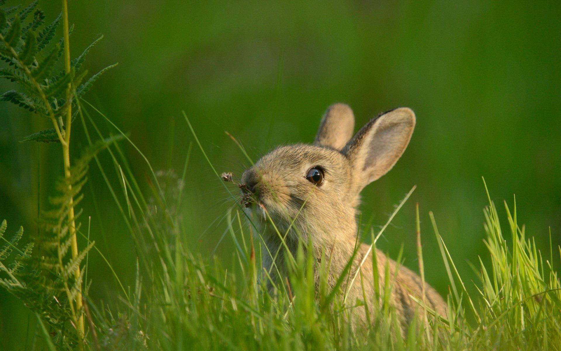 кролик трава  № 1964017 бесплатно