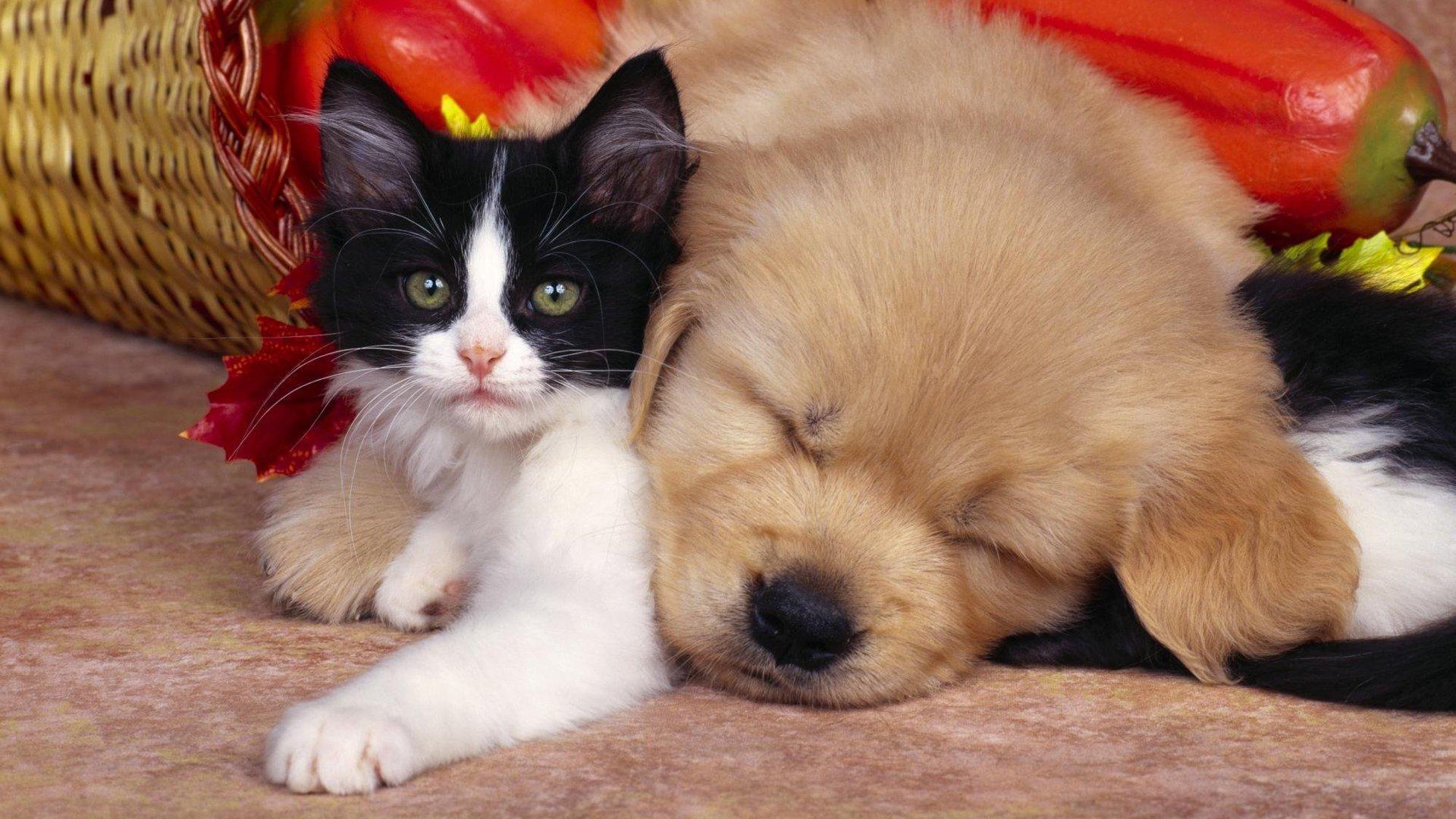 Картинки о котят и щенят