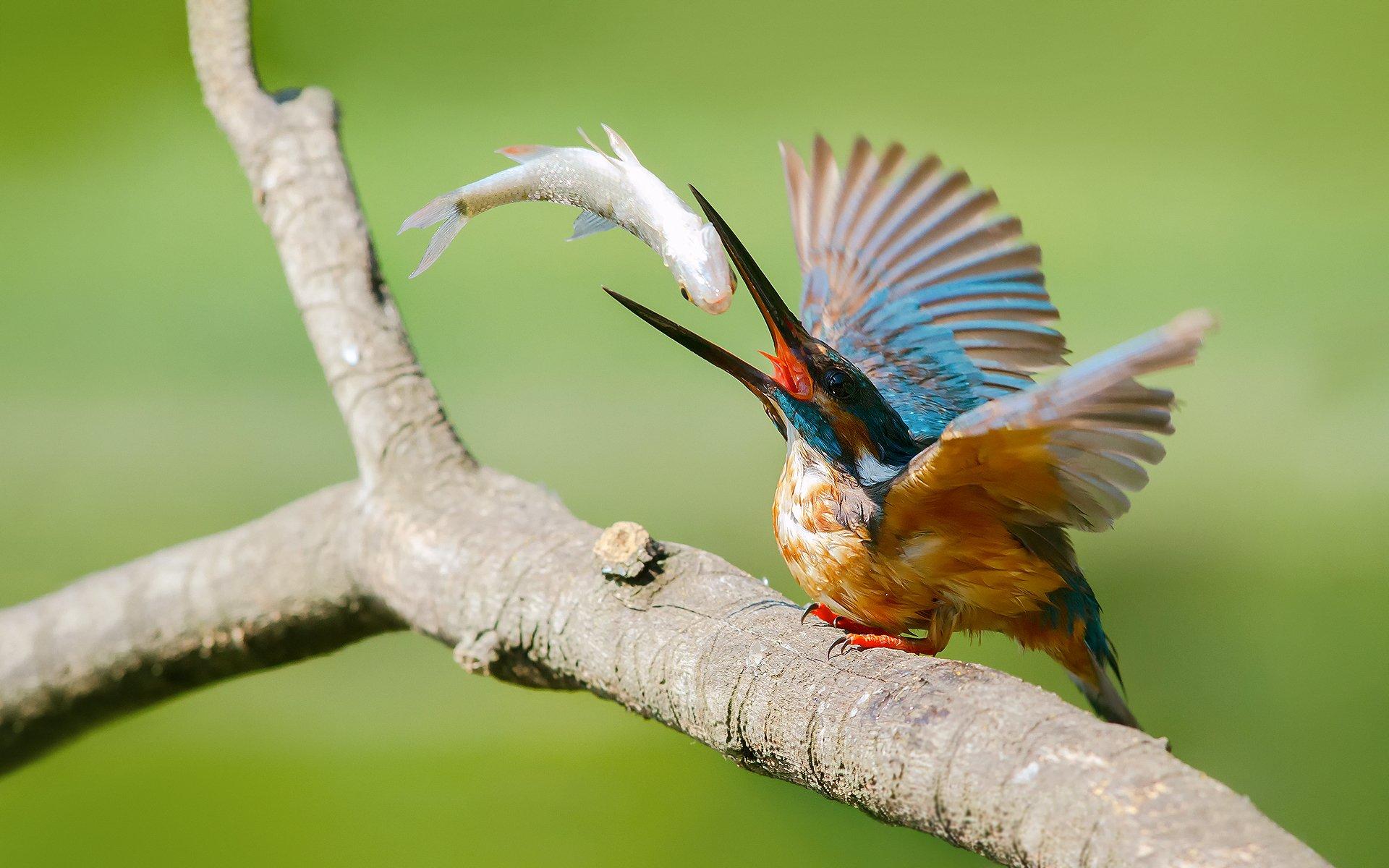птичка словила завтрак скачать