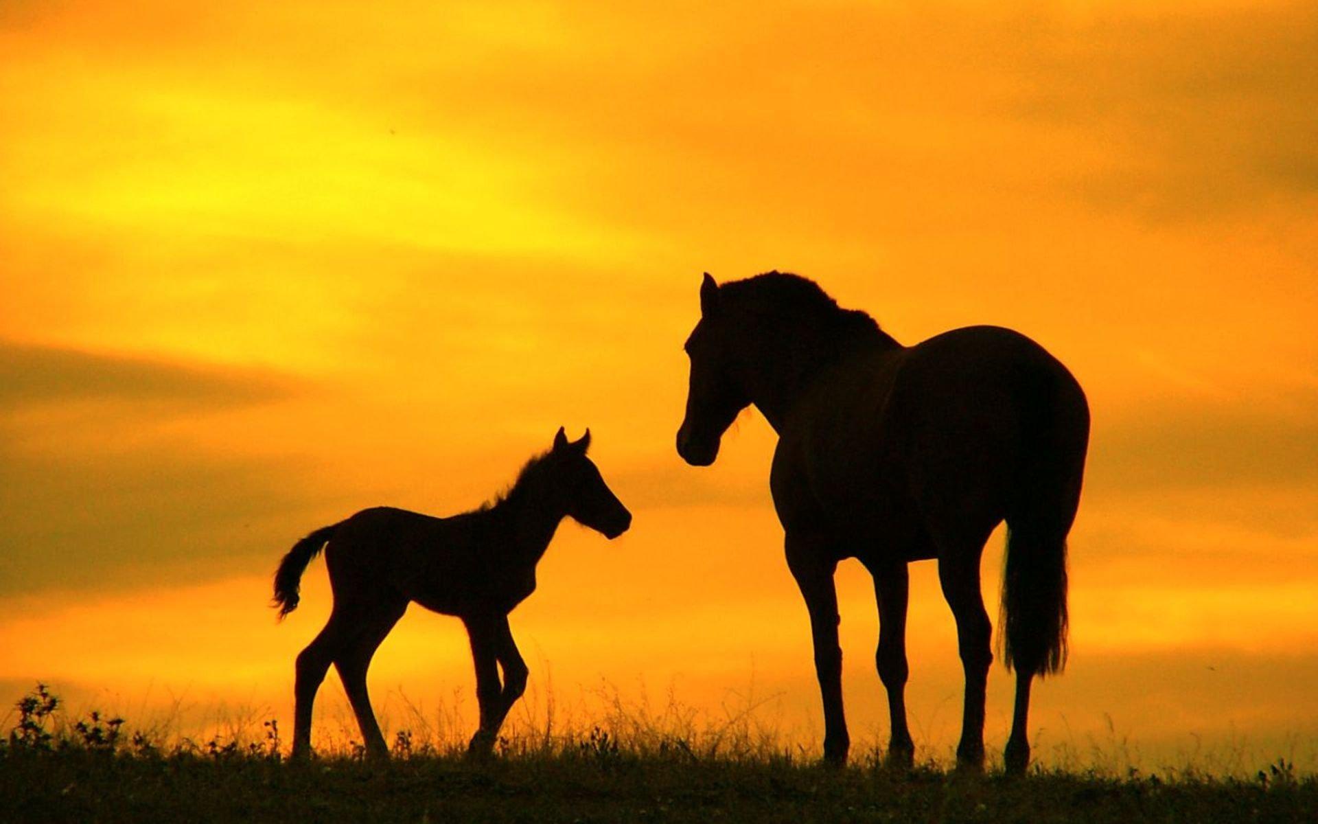 лошадь, трава, закат  № 2643 загрузить