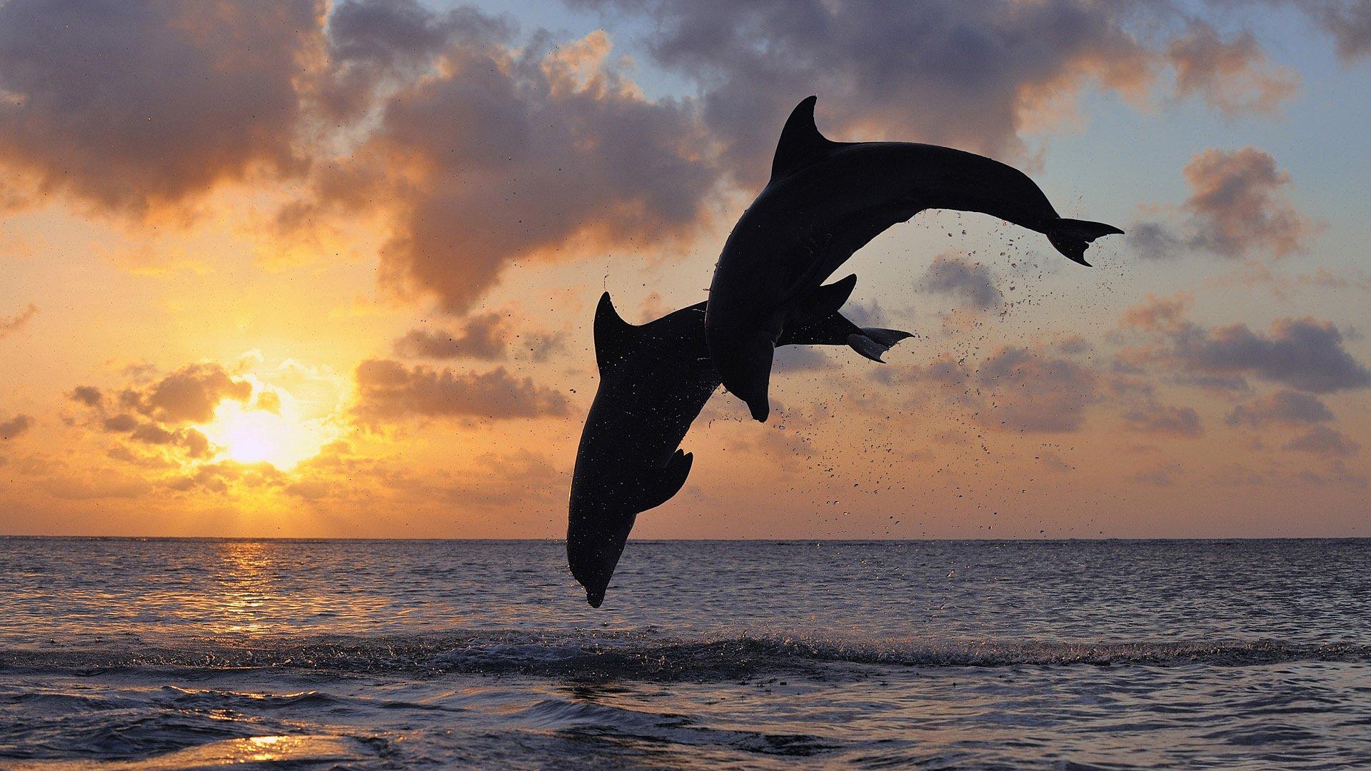 Картинки с морем и дельфинами, день радость моя