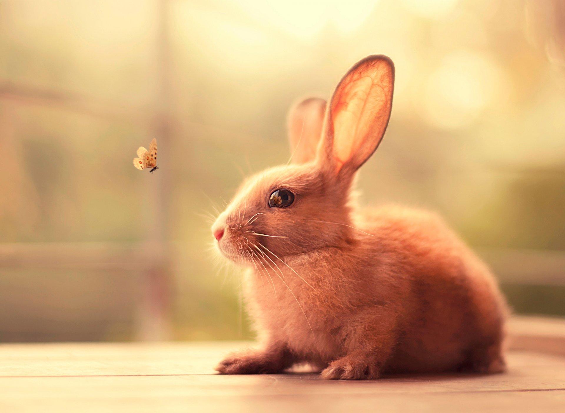 Картинки кроликов и зайчиков