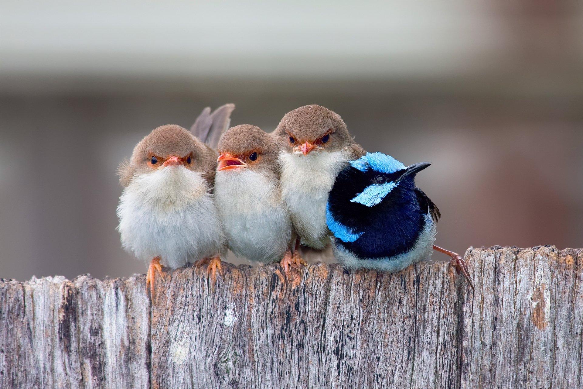 притаившиеся птички без смс