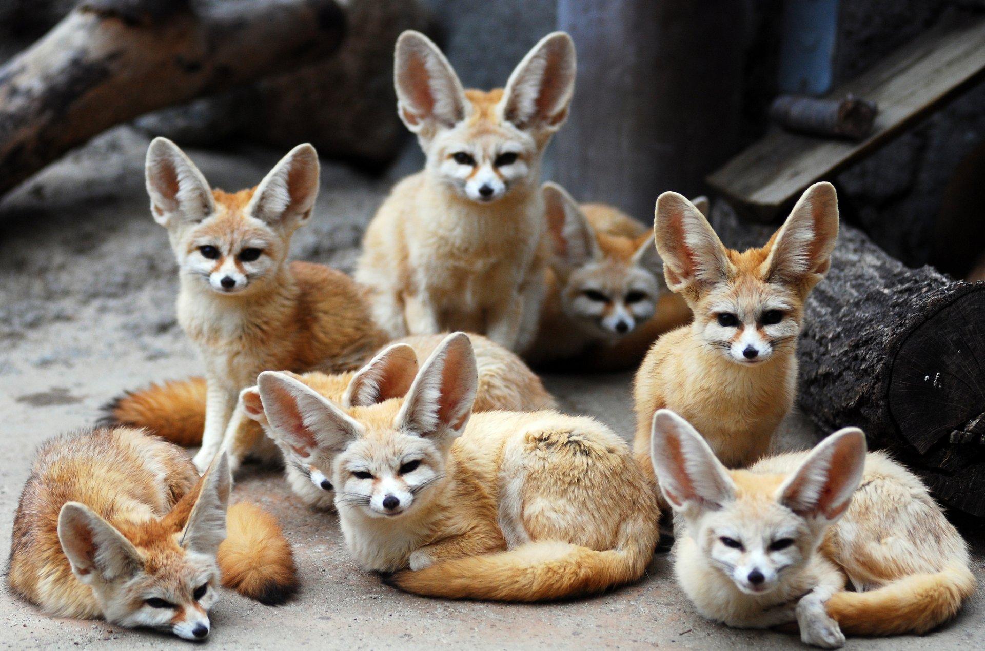 Экзотические животные для дома фото с названиями