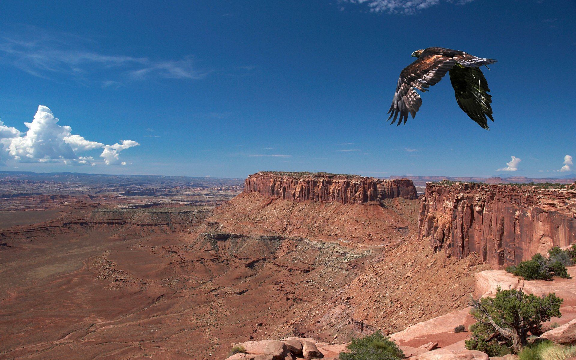 природа животные пустыня  № 3146349  скачать