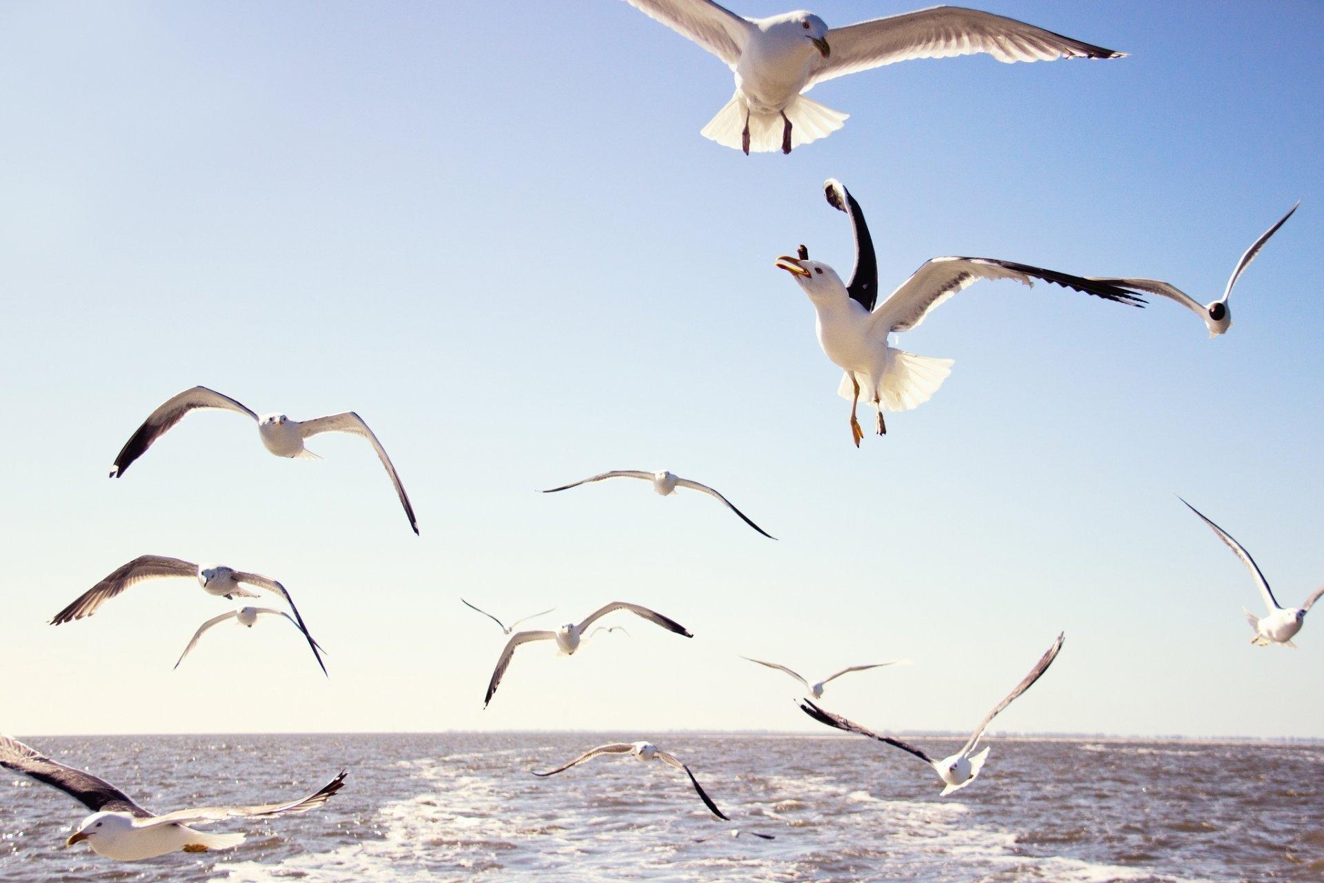 перед фото летящих чаек над морем наврал