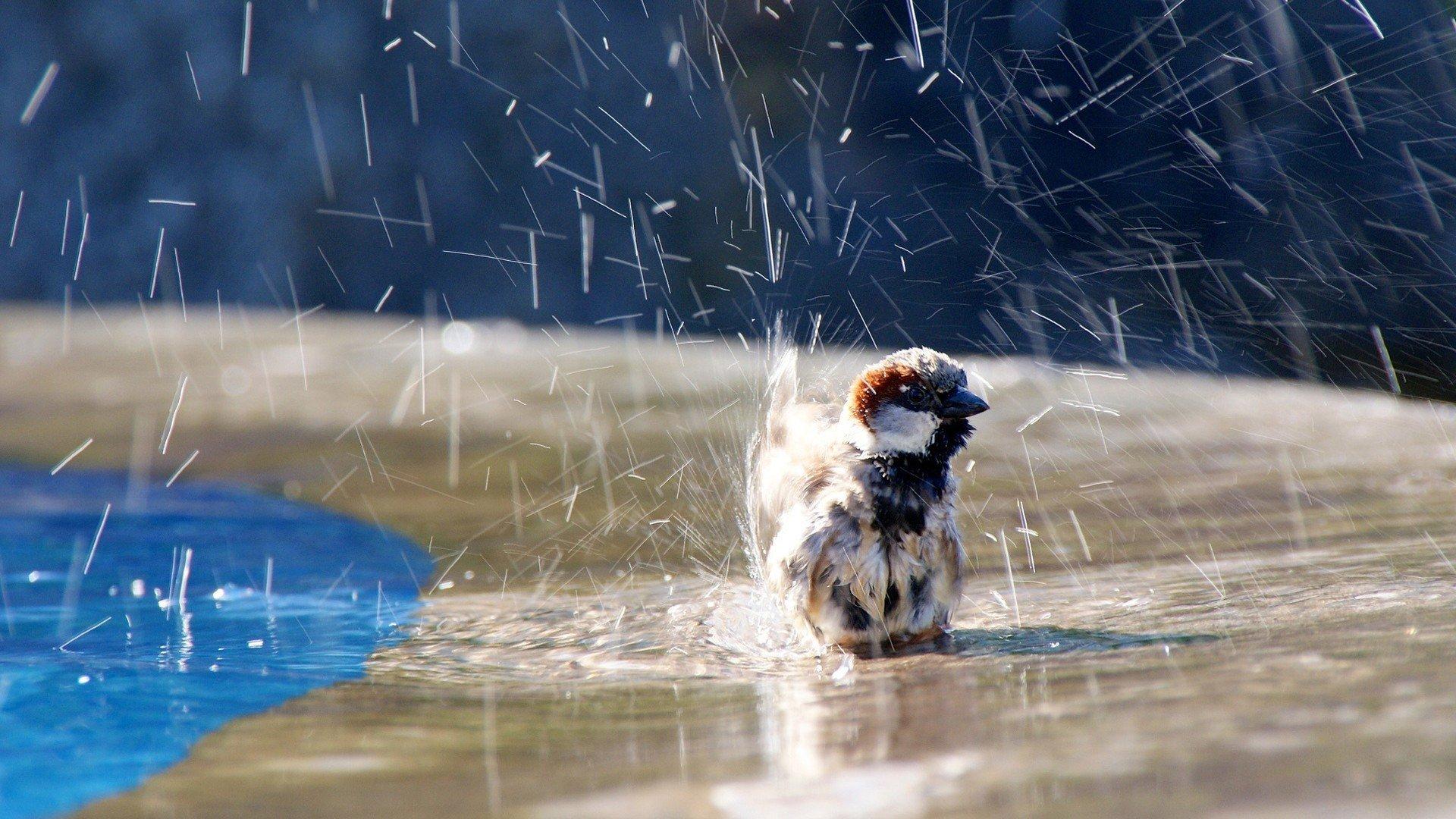 мокрая птичка скачать